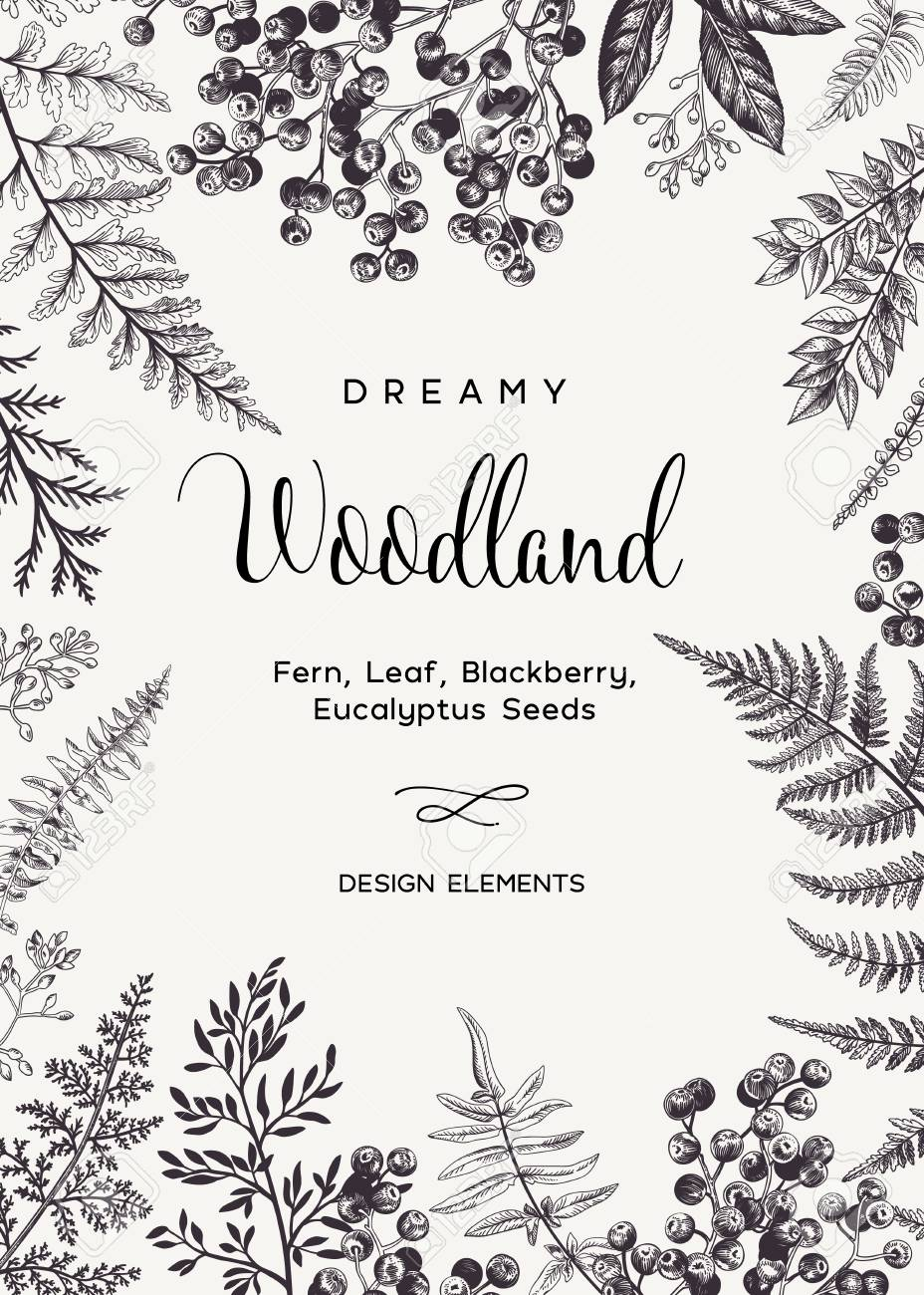 Vintage card with fern leaves and black berries. Wedding invitation. Engraving style. Botanical illustration. Design elements. Vector. Black and white. - 126207006