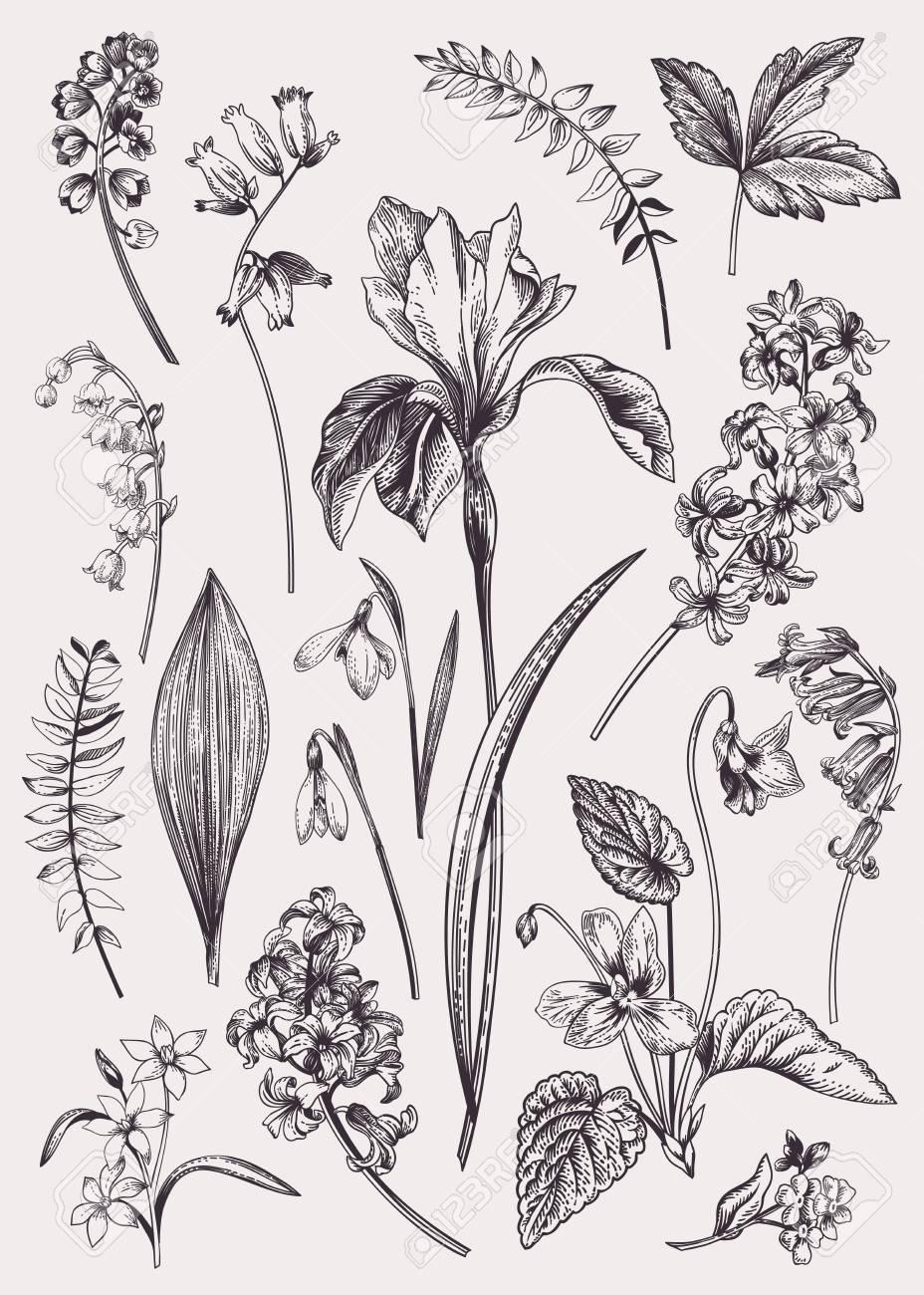 Set with spring flowers. Vintage botanical illustration. Vector floral elements. Black and white. - 109758290