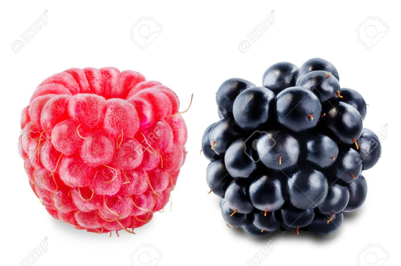 Raspberry and blackberry on a white isolated background. toning. selective focus - 149940486