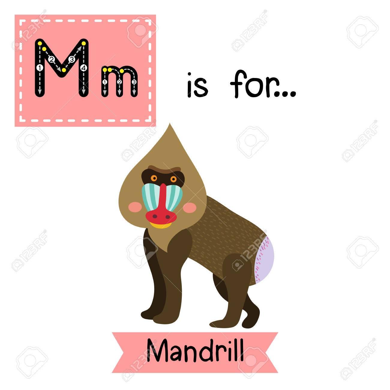 Animal con la letra m