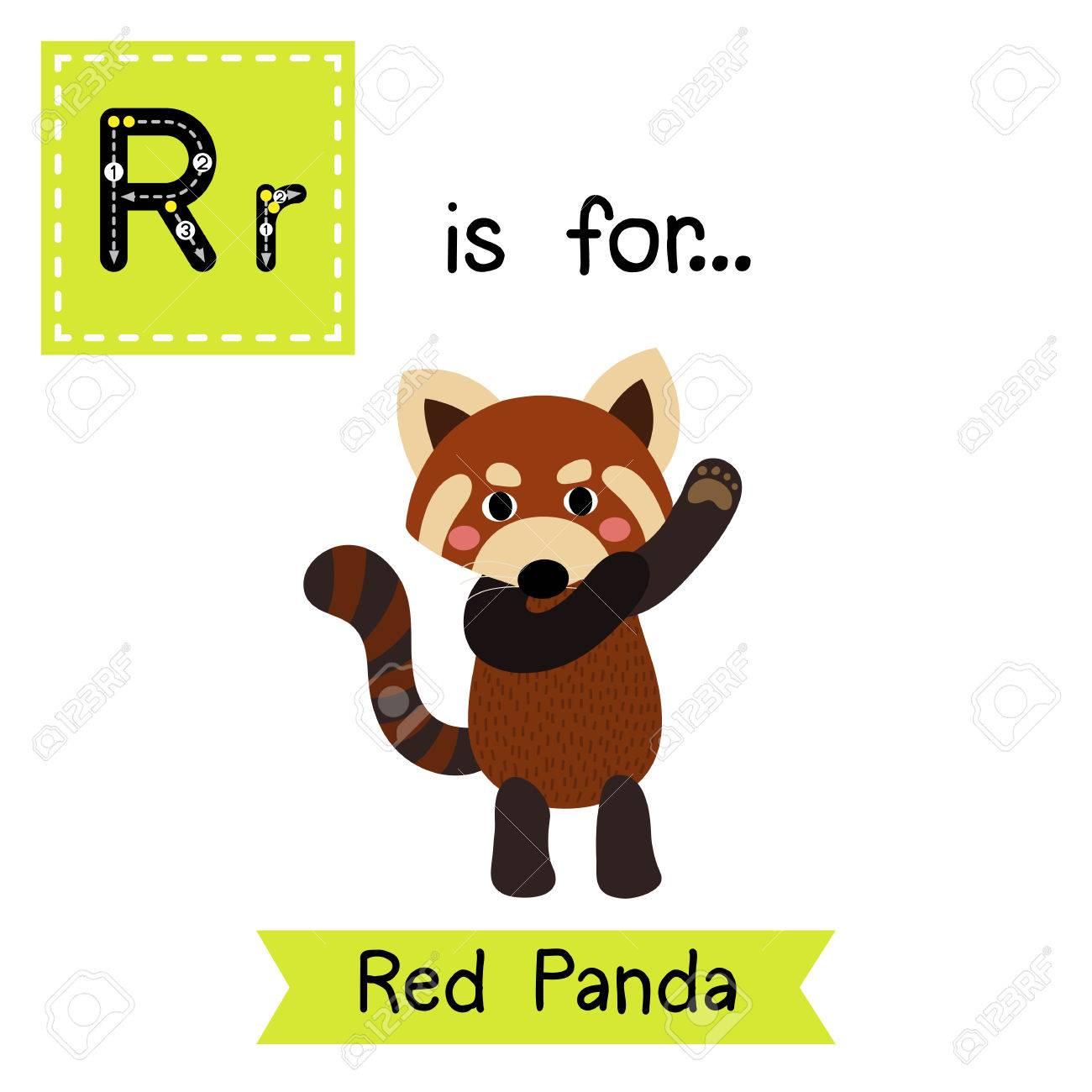 R Carta De Rastreo. Panda Rojo De Baile. Tarjeta De Destello Del ...