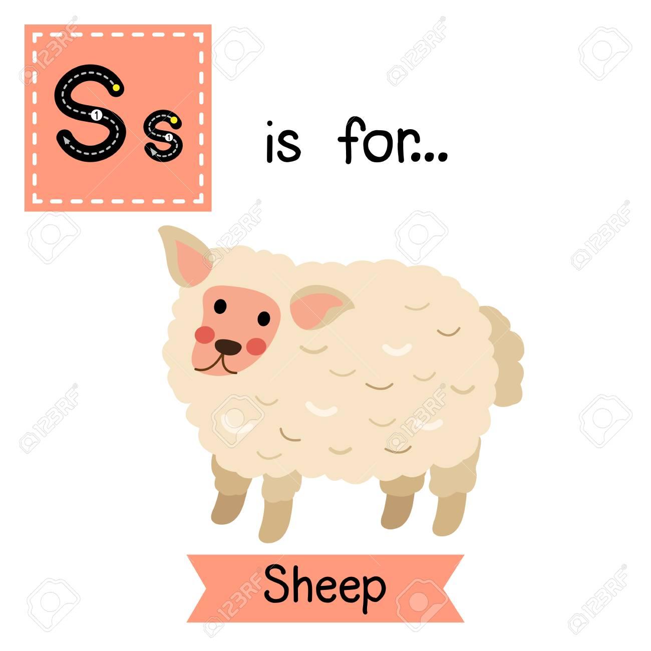 S Lettre Suivi Moutons Debout Alphabet Flash Carte Enfants Zoo Mignon Drôle Animaux de Bande Dessinée Enfants De