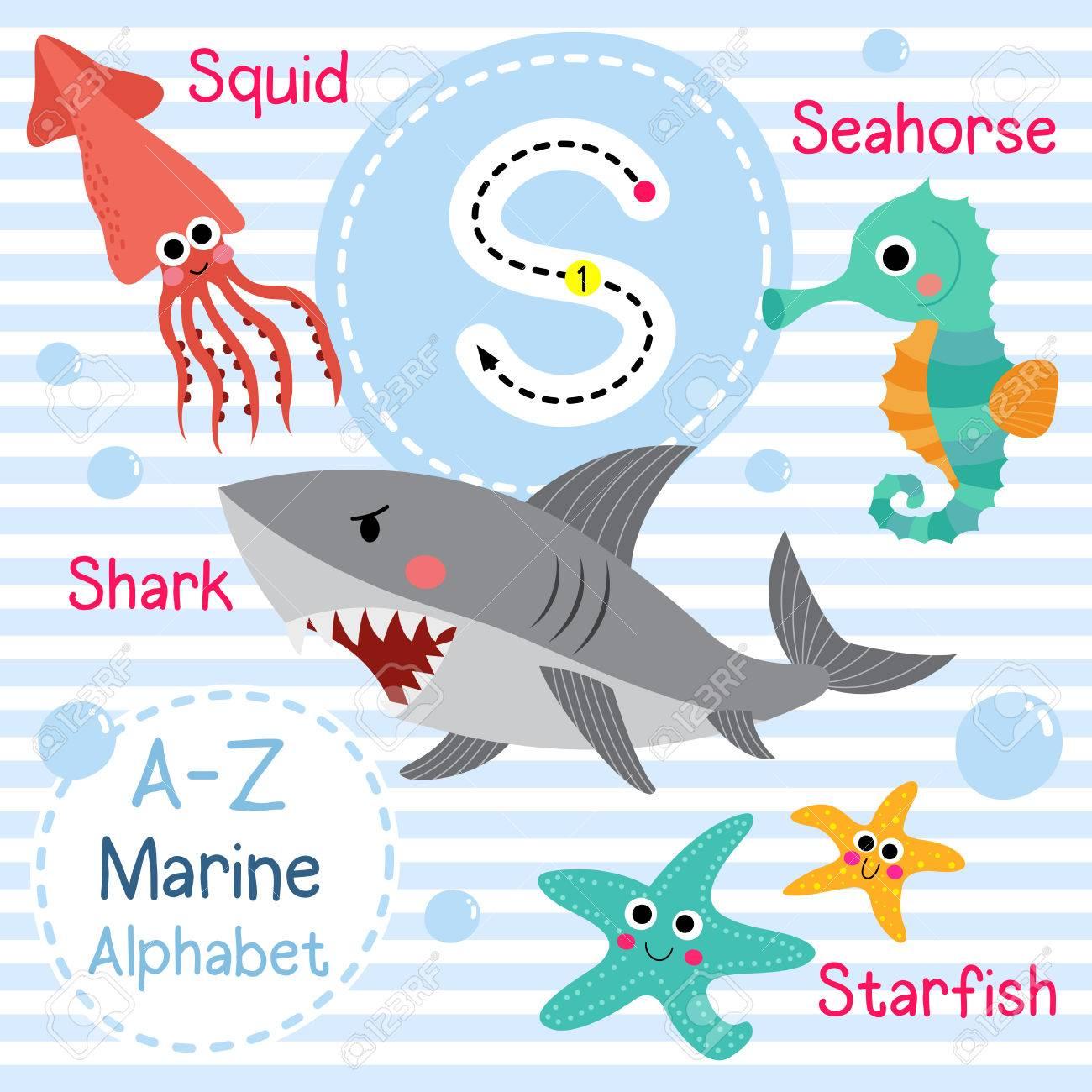 S Carta De Rastreo Tiburón Calamar Estrella De Mar Caballo De