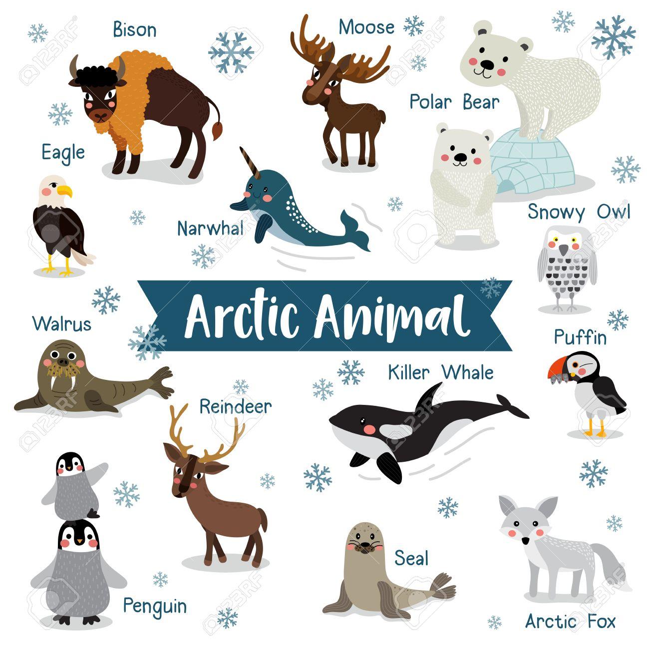 Top Bande Dessinée Arctique Animaux Sur Fond Blanc Avec Le Nom De L  IR65