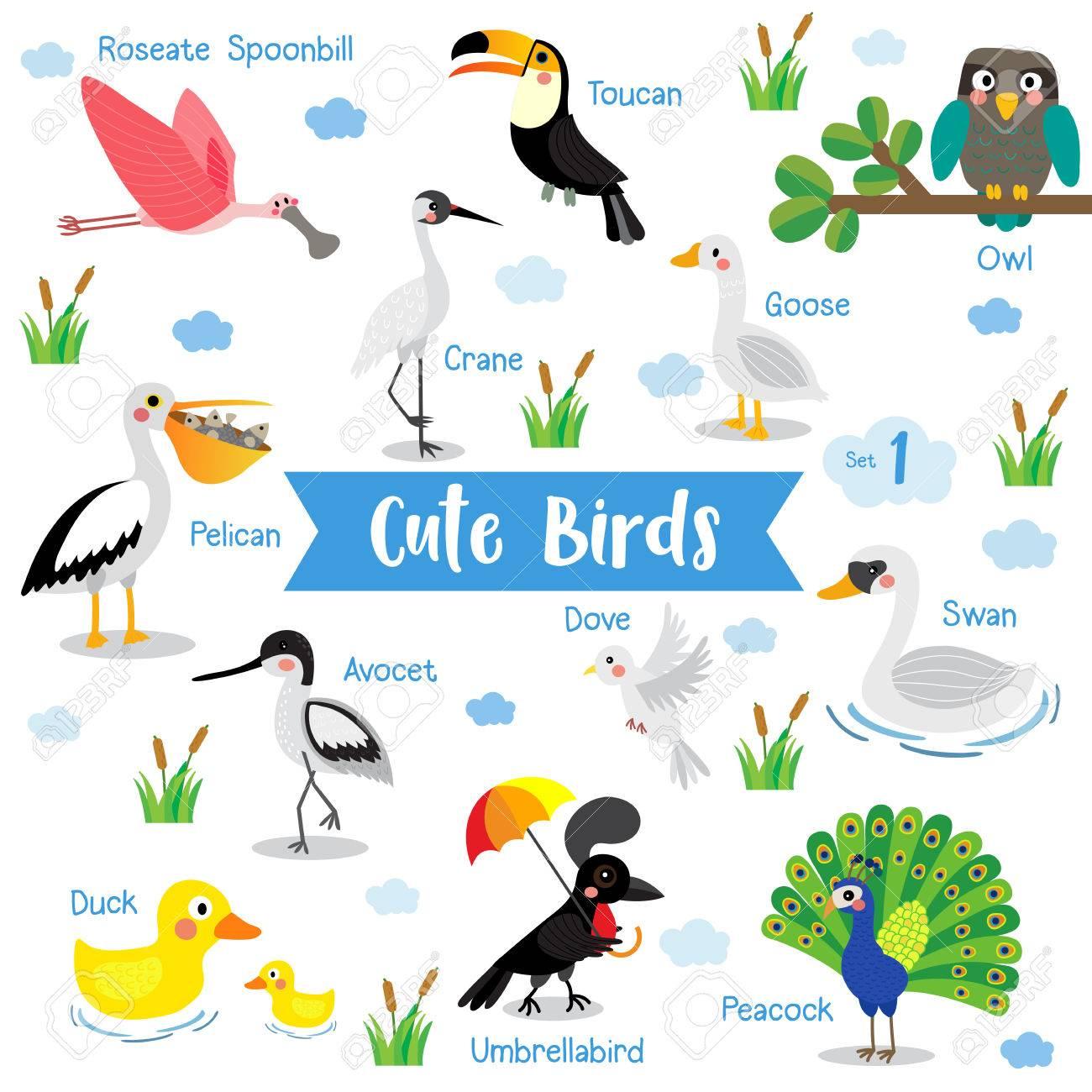 Cute Birds Animal Cartoon On White Background With Animal Name