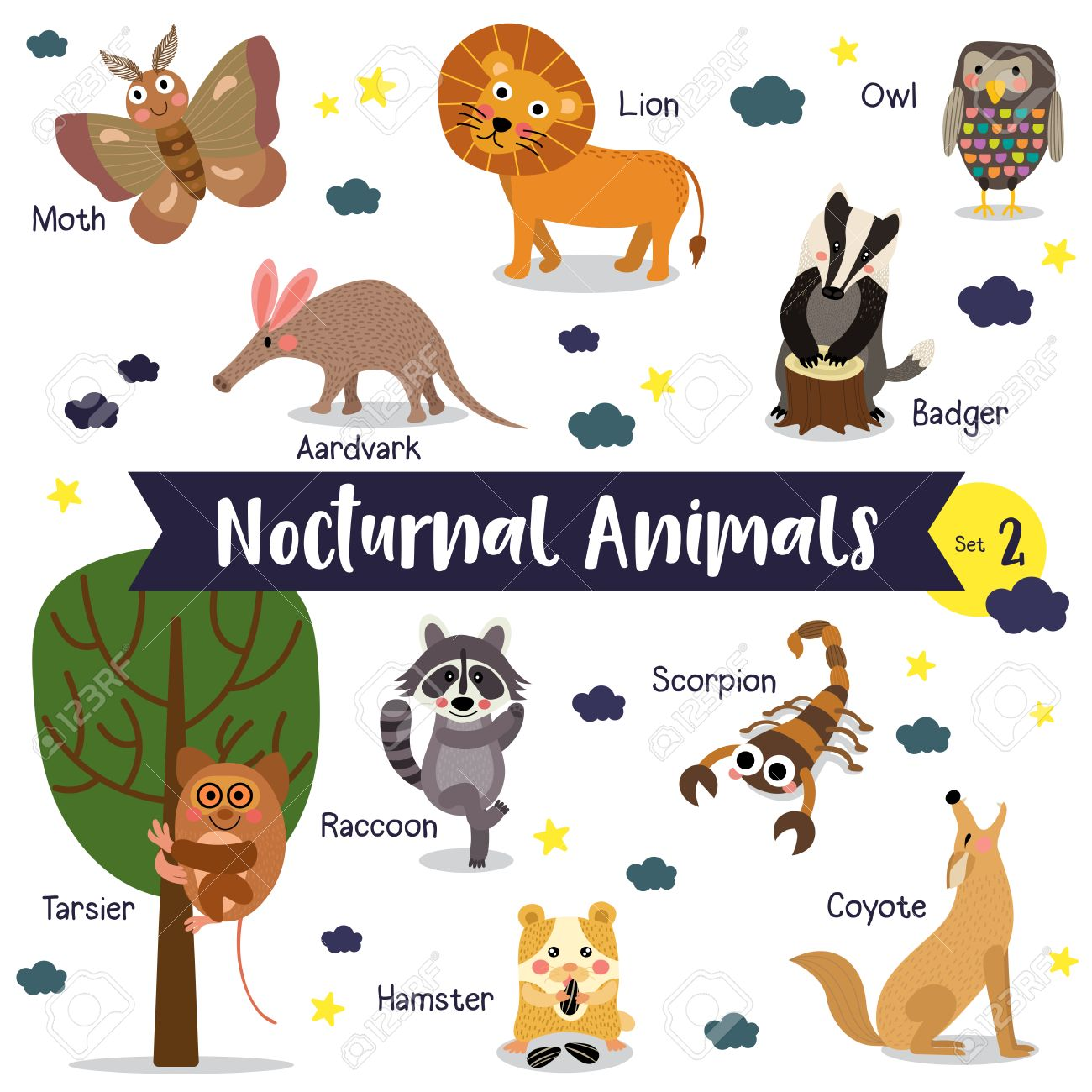 Nocturnal Animals cartoon on white background with animal name
