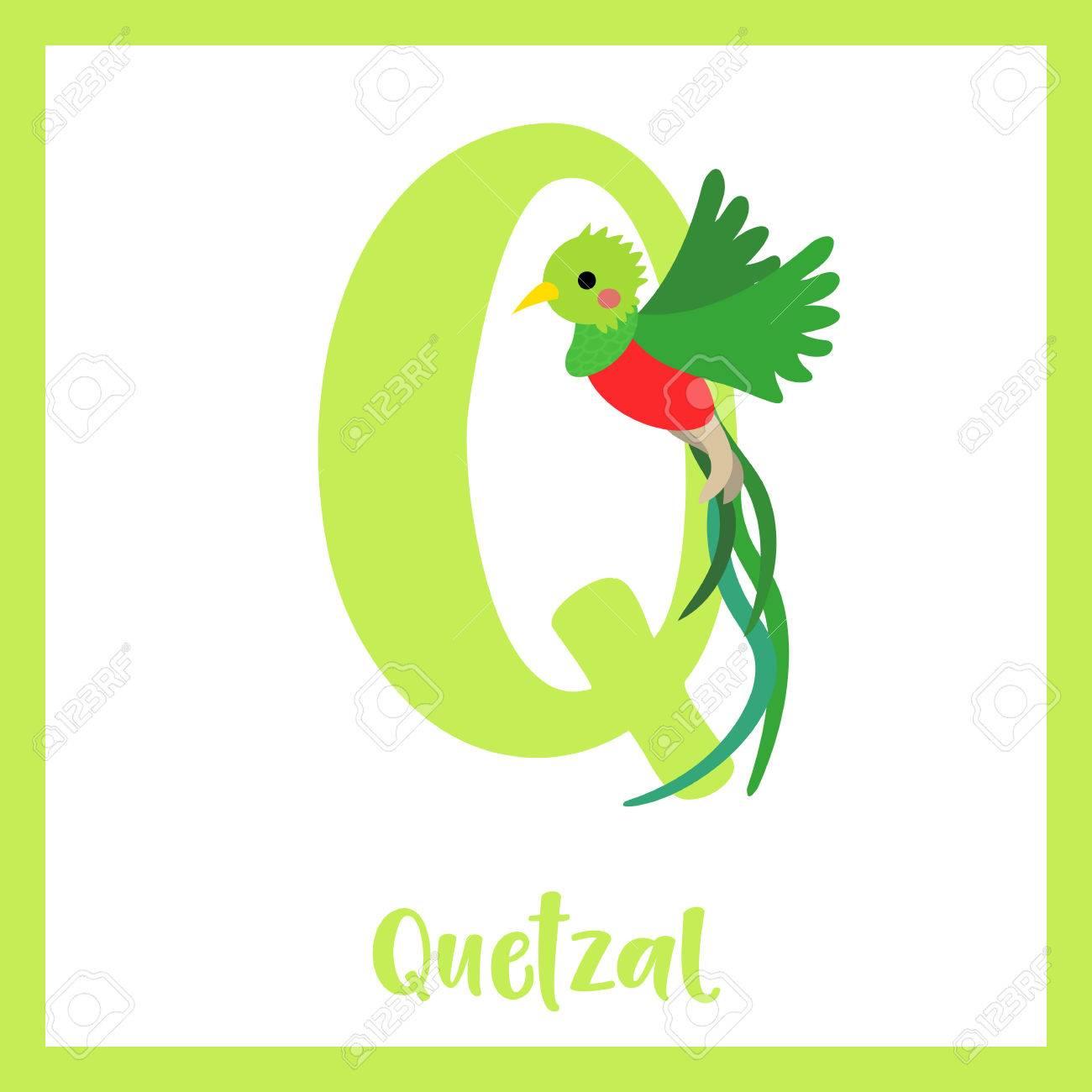 Q 文字語彙。飛んでいるケツァール鳥。かわいい子供たち ABC 動物園アルファベット フラッシュ カード。面白い漫画の動物。Abc  教育を子供たちには。英語の語彙を学習します。ベクトルの図。