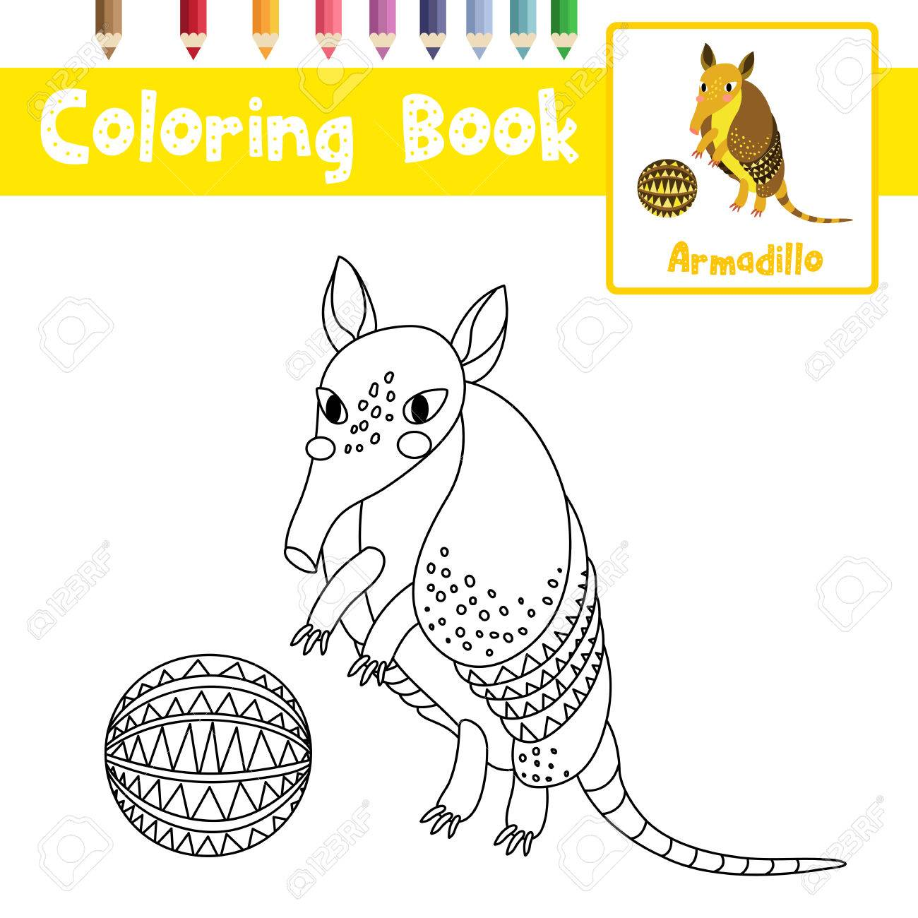 Coloring Page Of Standing Armadillo With Ball Animals For Preschool Kids  Activity Educational Worksheet. Vector