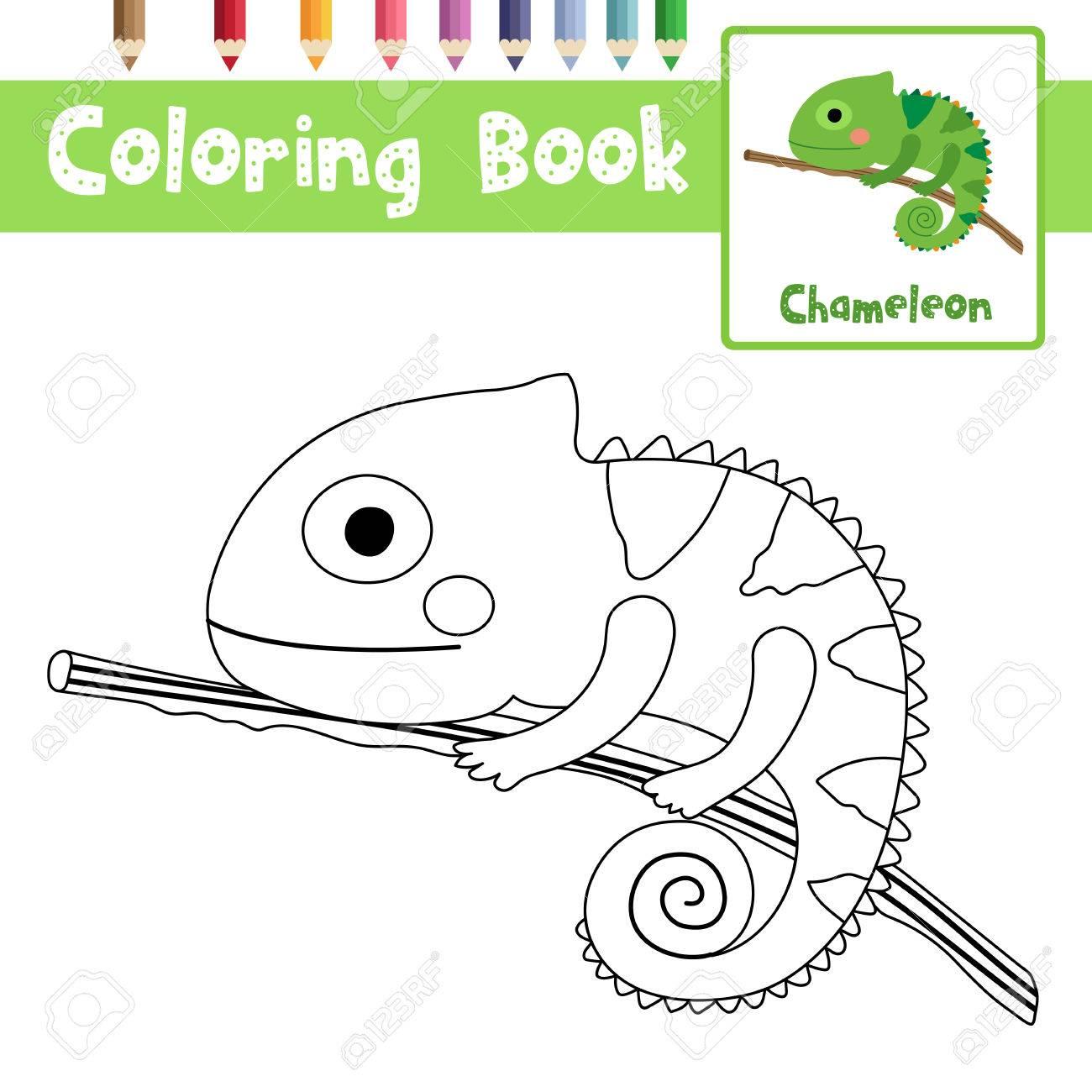 Dibujo Para Colorear Chameleon En La Rama De Los Animales Para Los