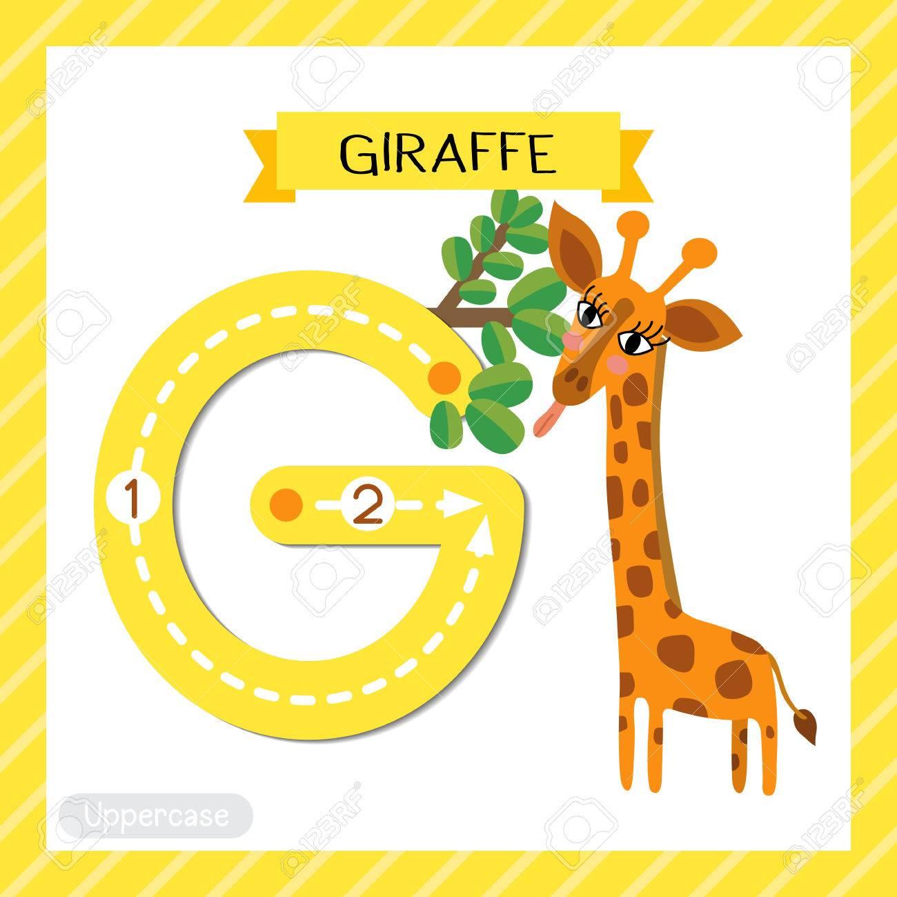 Letter g uppercase cute children colorful zoo and animals abc letter g uppercase cute children colorful zoo and animals abc alphabet tracing flashcard of giraffe eating spiritdancerdesigns Gallery