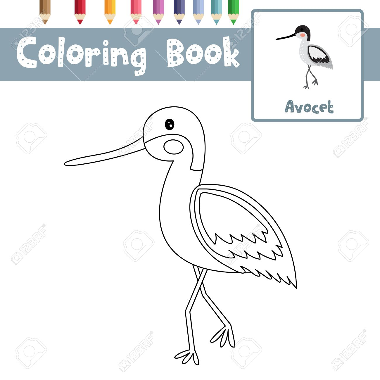 Coloring Page Of Avocet Standing In Water Animals For Preschool Kids  Activity Educational Worksheet. Vector