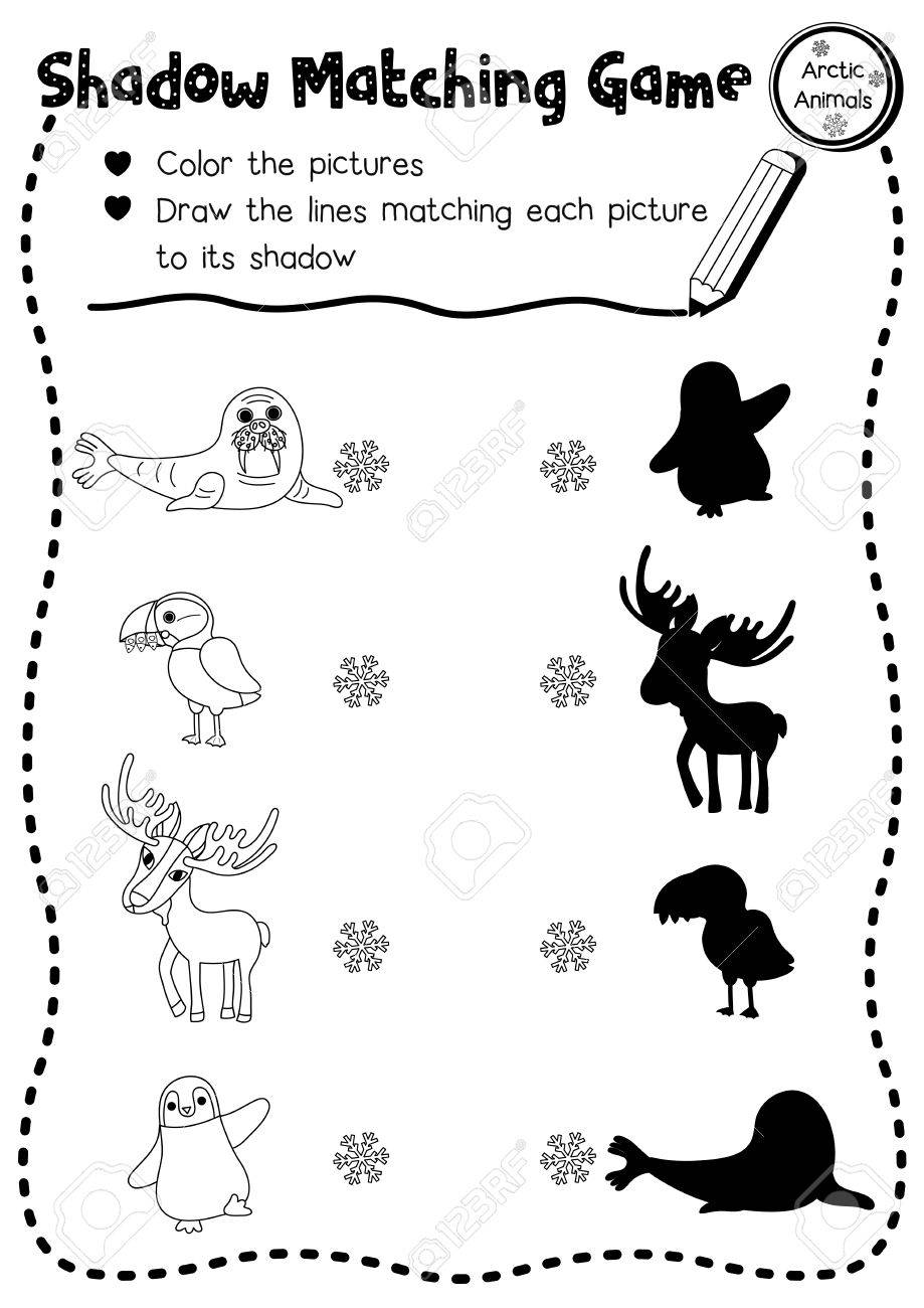 shadow matching game of arctic animals for preschool kids activity worksheet layout in a4 coloring printable - Kids Activity Worksheet