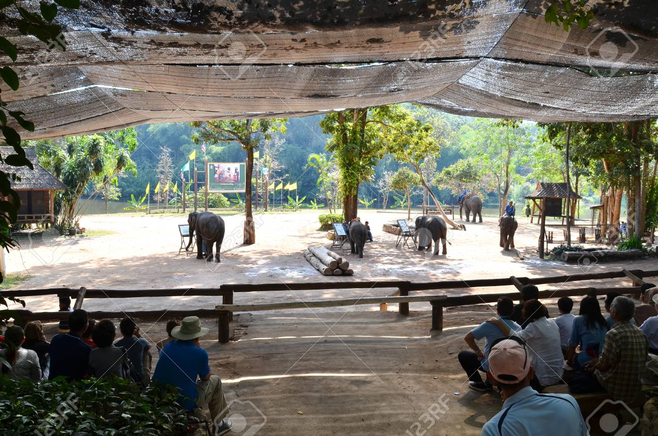 LAMPANG, THAILAND - NOV. 30: The mahout and elephant are performed. It shows up twice a day in The Thai Elephant Conservation Center (TECC) at Lampang. November 30, 2011 in Lampang, Thailand. Stock Photo - 12445085
