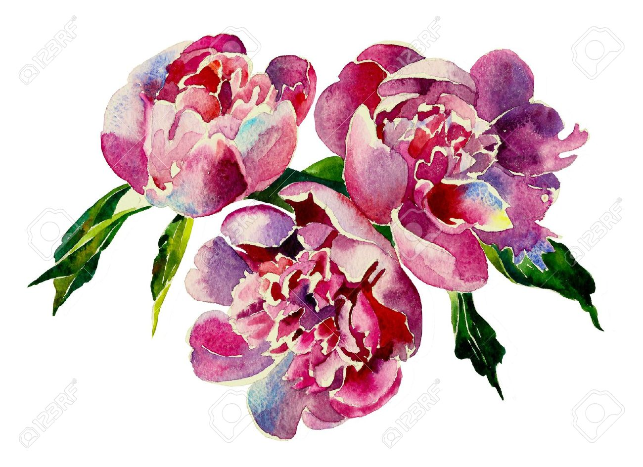 Three Pink Peonies Watercolor Stock Photo Picture And Royalty Free