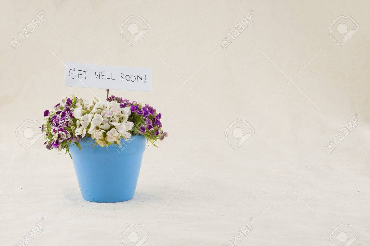 Doux Bouquet De Fleurs De William Dans Un Pot Bleu Ciel Avec Carte Bon Rétablissement Bientôt