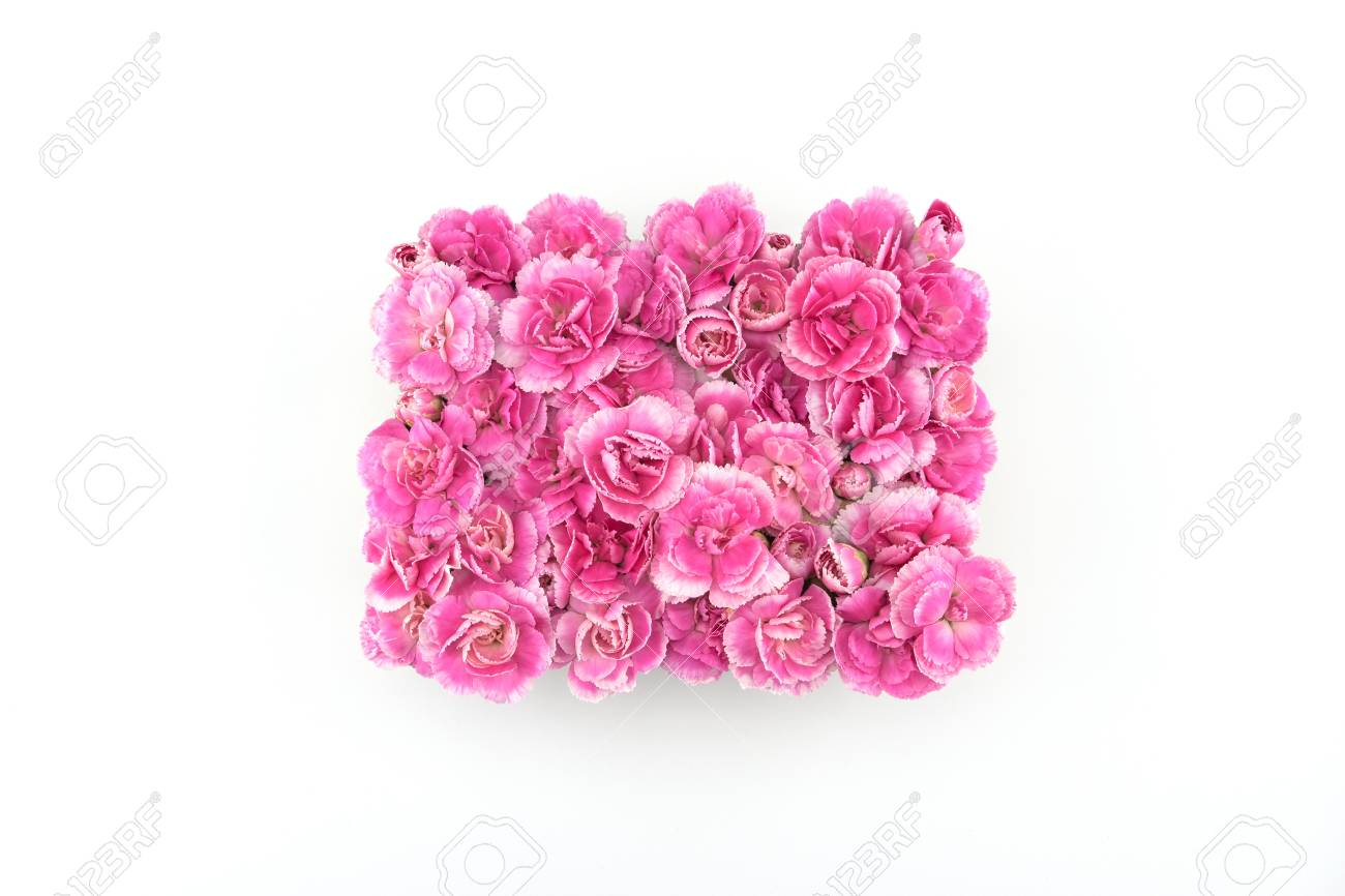 Square Pink Carnation Flowers On White Background Stock Photo