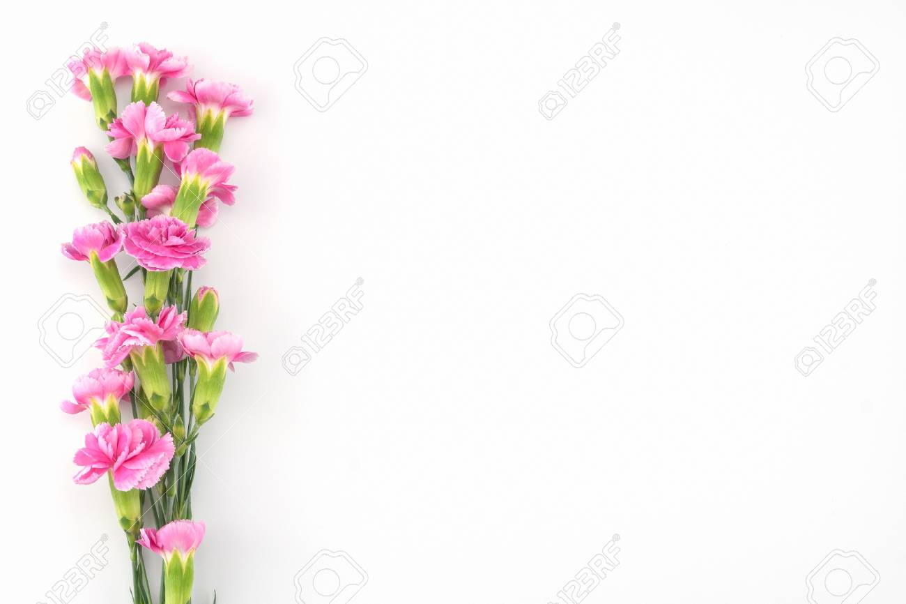 Pink Carnation Flowers Bouquet On White Background With Copy Stock