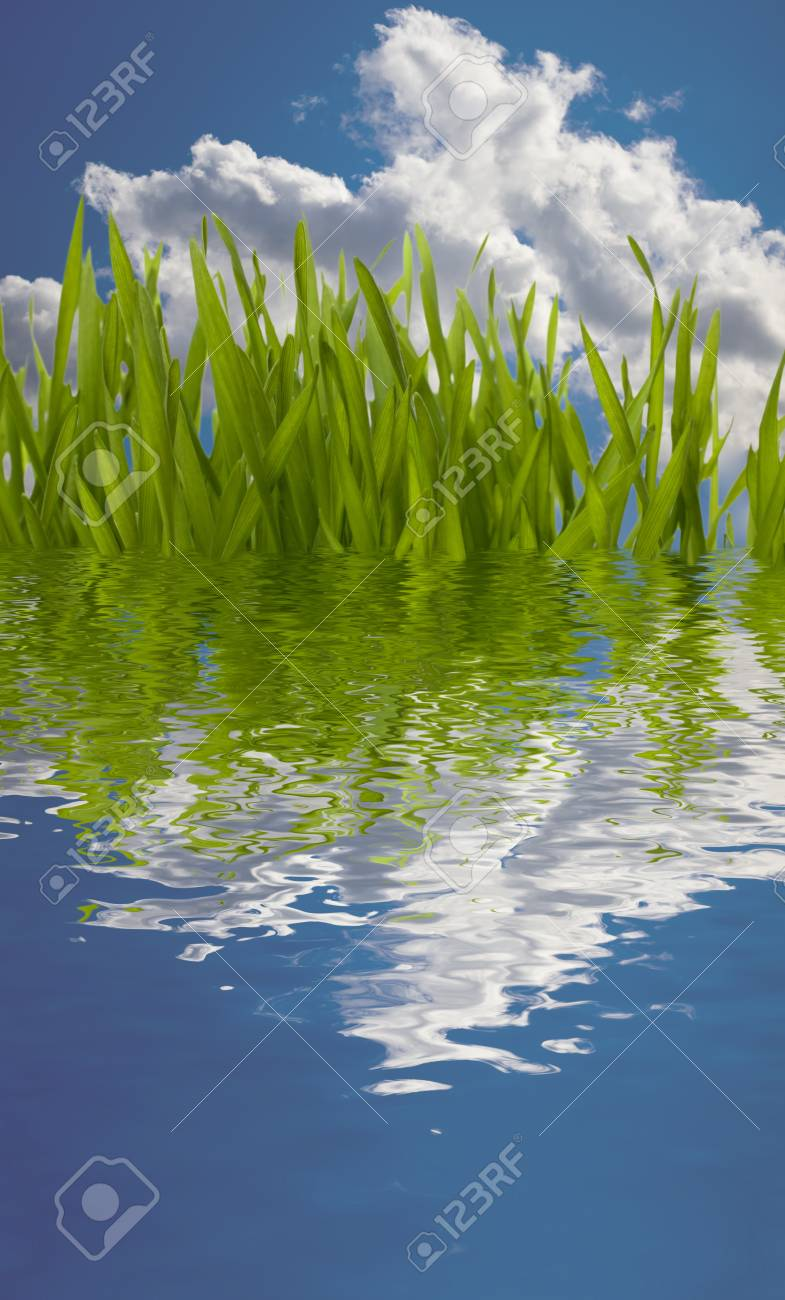 Beautiful nature background. Grass reflection in water. Stock Photo - 8285714