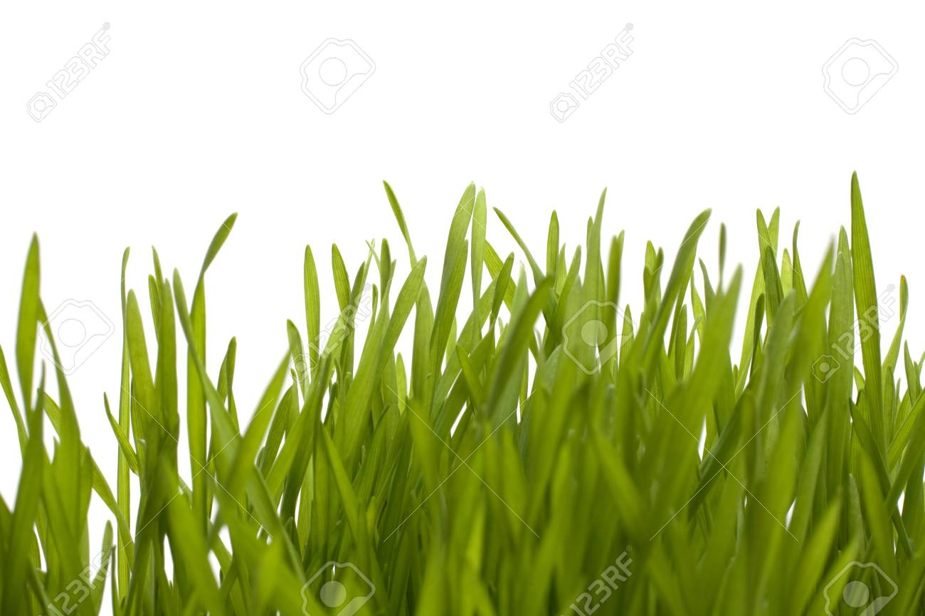grass isolated on white background Stock Photo - 8527472