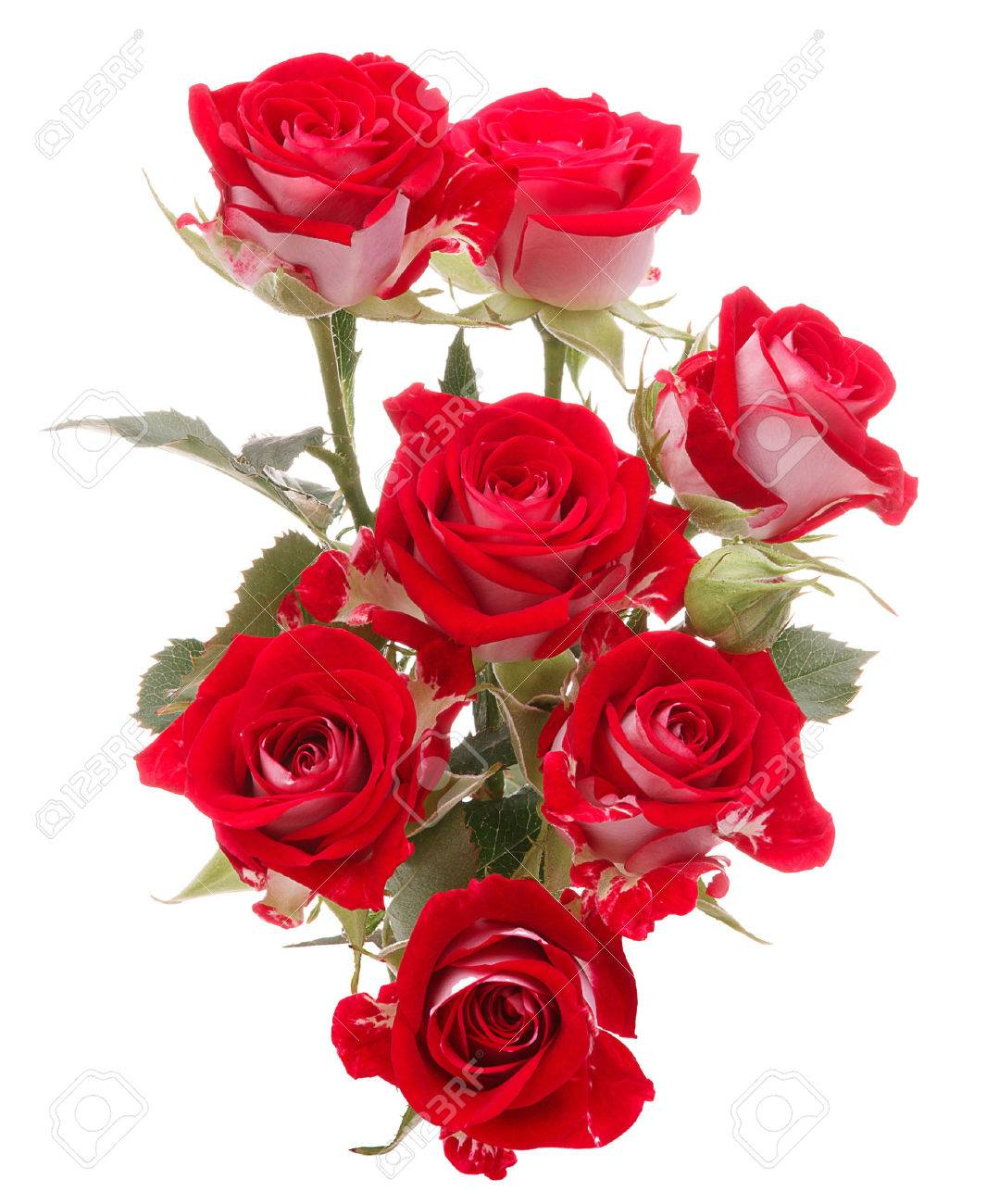 Red rose flower bouquet isolated on white background cutout stock red rose flower bouquet isolated on white background cutout stock photo 24288596 izmirmasajfo