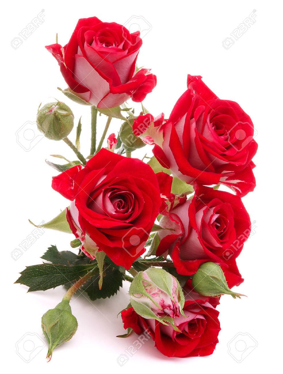 Red Rose Flower Bouquet Isolated On White Stock Photo, Picture And ...