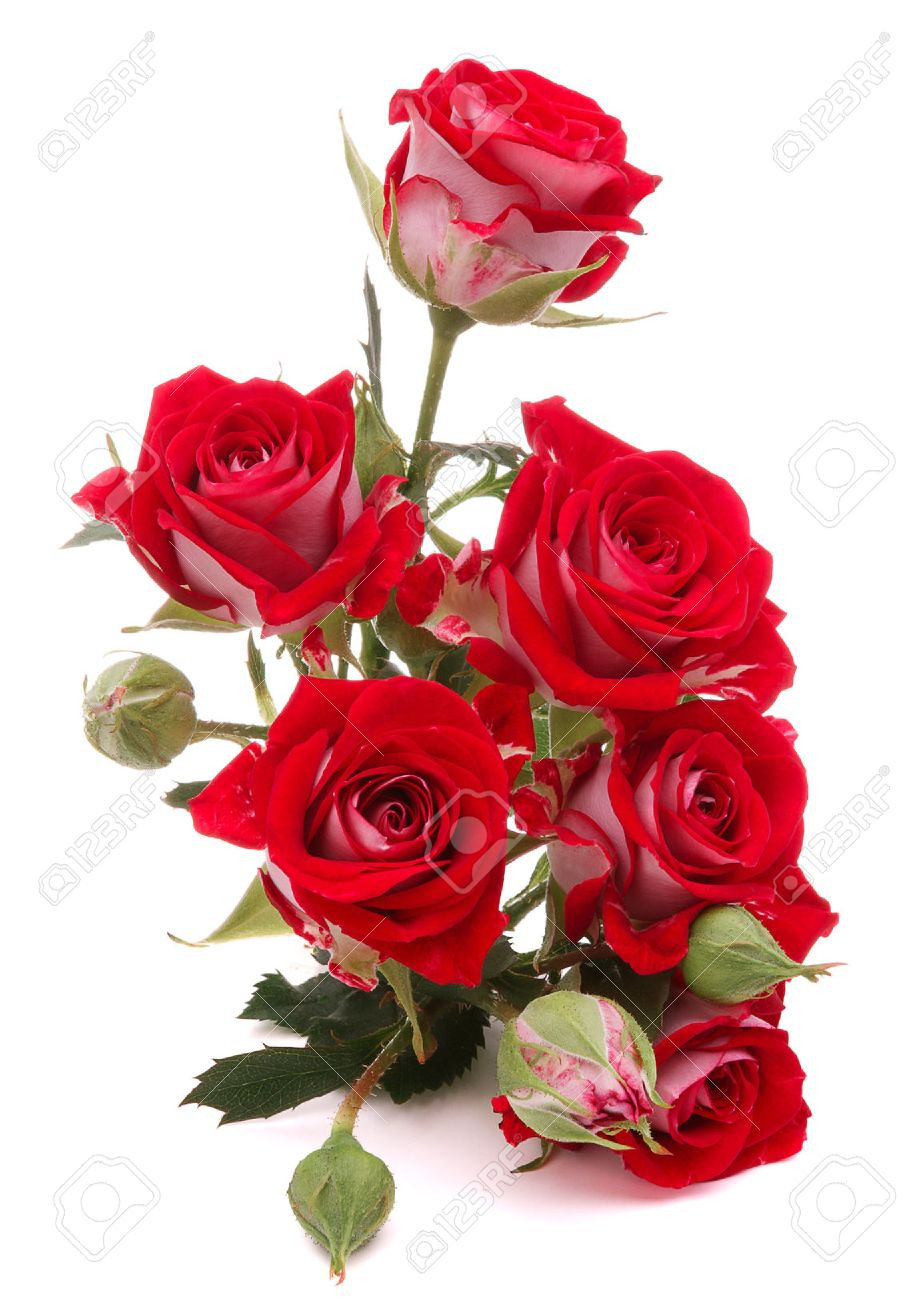 Red Rose Flower Bouquet Isolated On White Background Cutout Stock ...