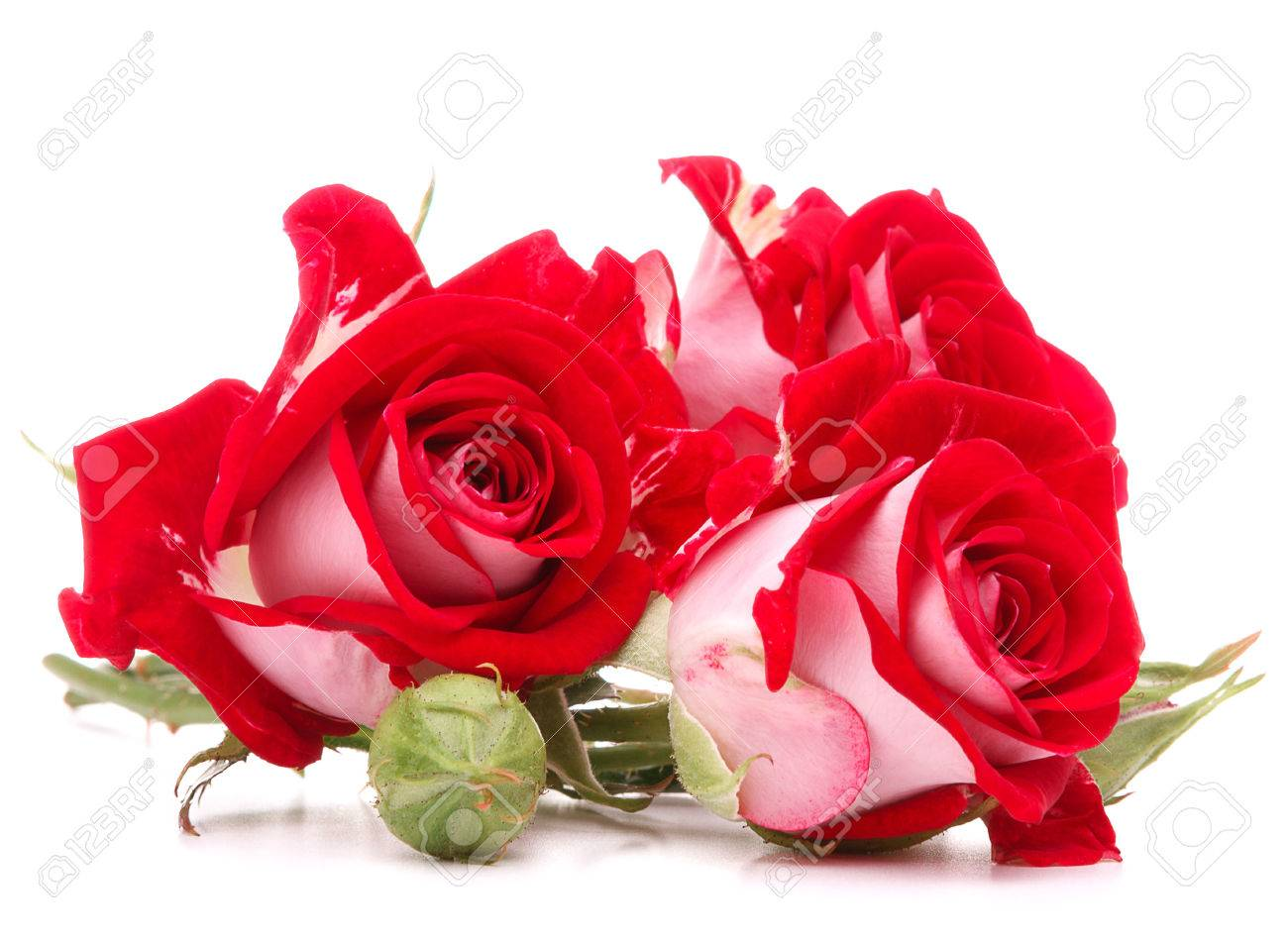 Red rose flower bouquet isolated on white background cutout stock red rose flower bouquet isolated on white background cutout stock photo 26105339 izmirmasajfo