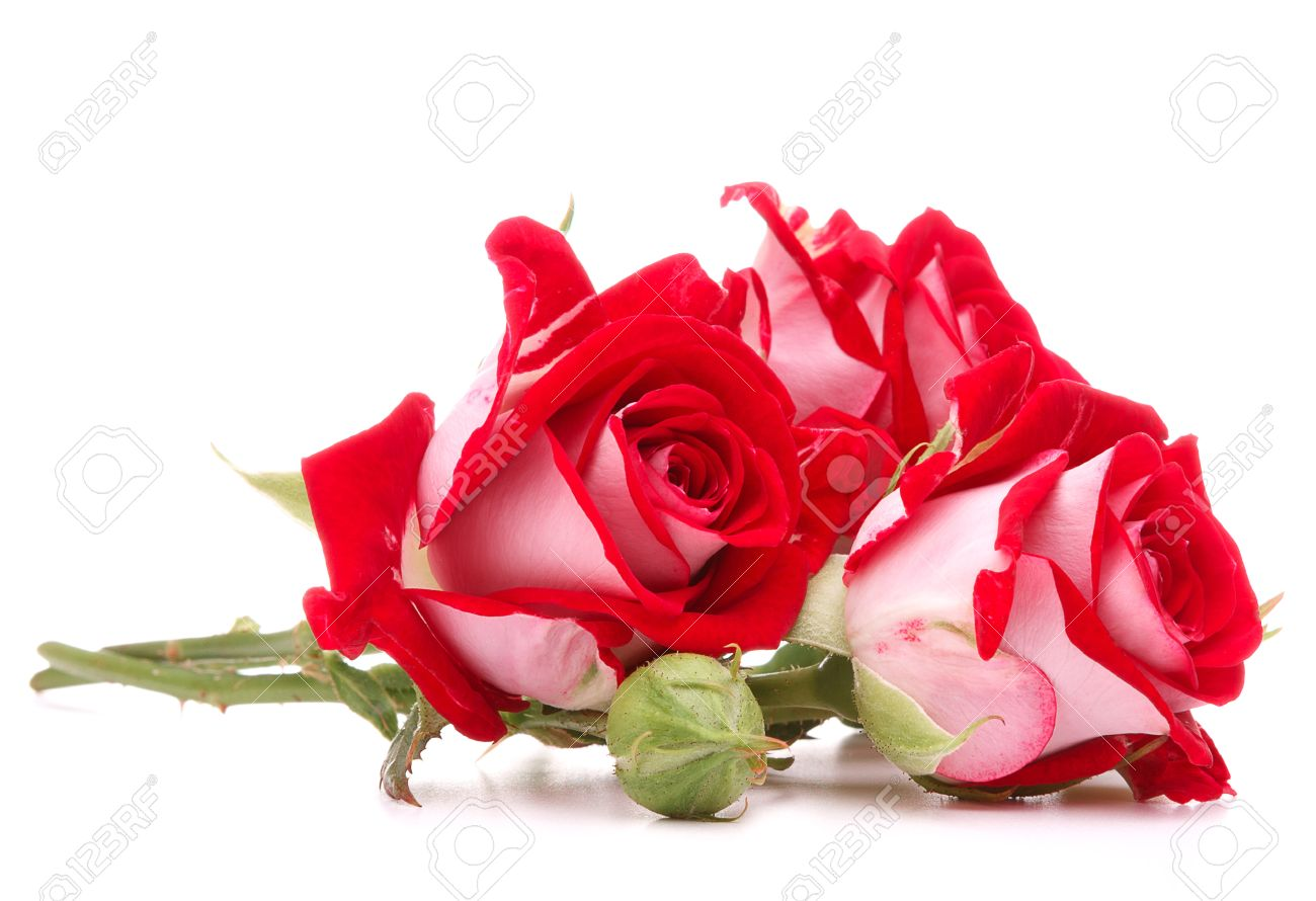 Red rose flower bouquet isolated on white background cutout stock red rose flower bouquet isolated on white background cutout stock photo 29169278 izmirmasajfo