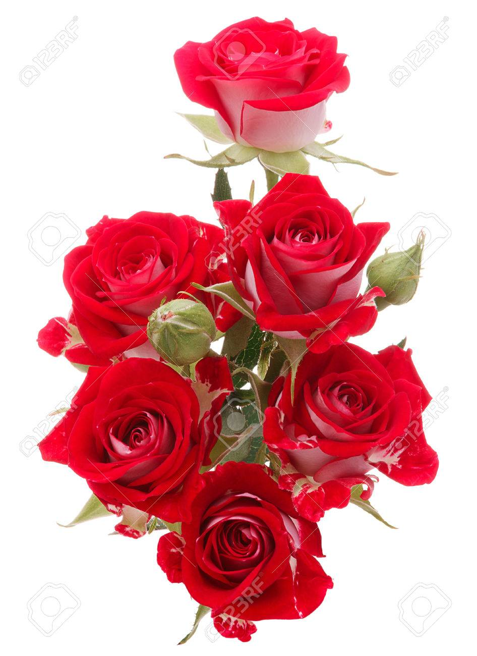 Red Rose Flower Bouquet Isolated On White Background Cutout Stock