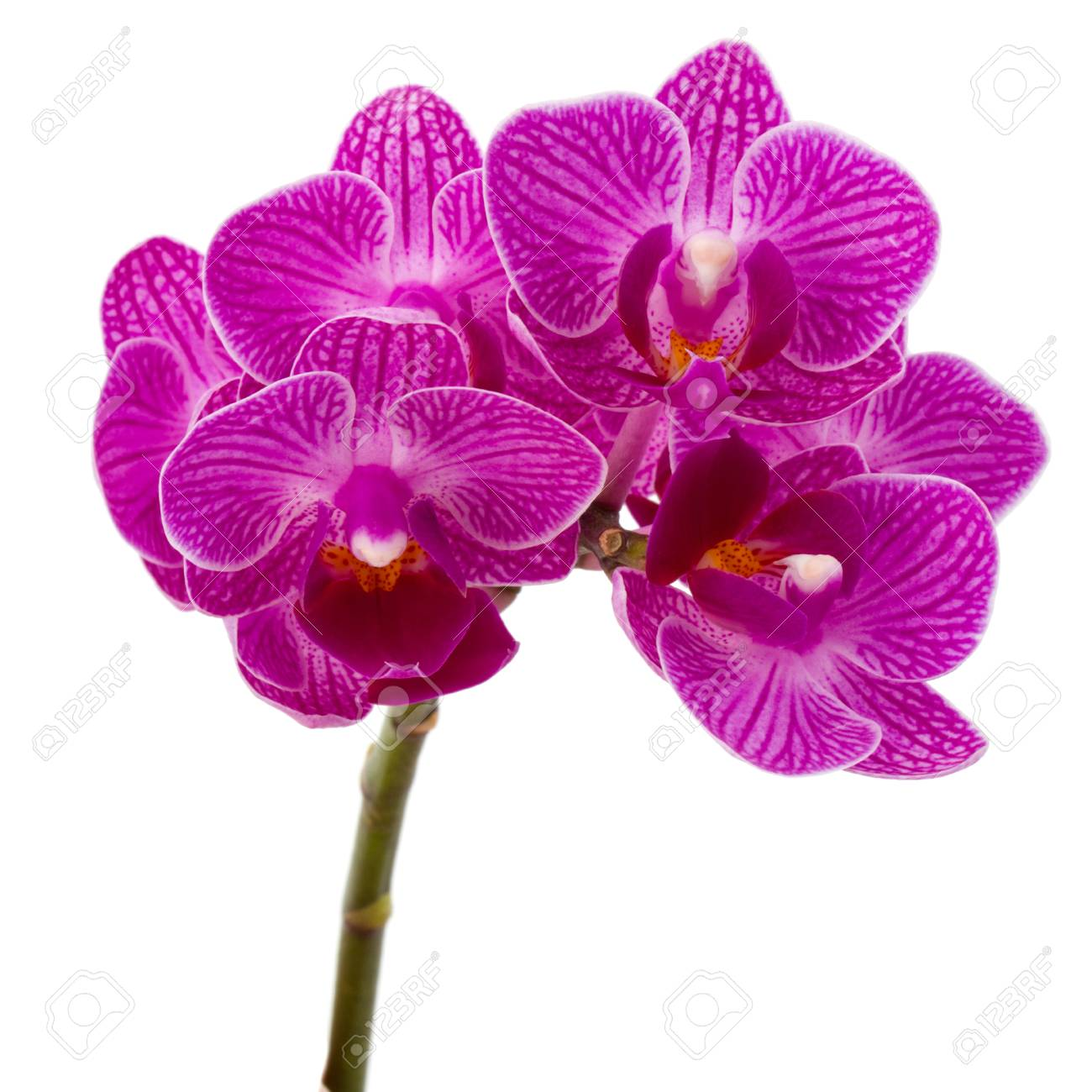 Orchid flower head bouquet isolated on white background - 48844615