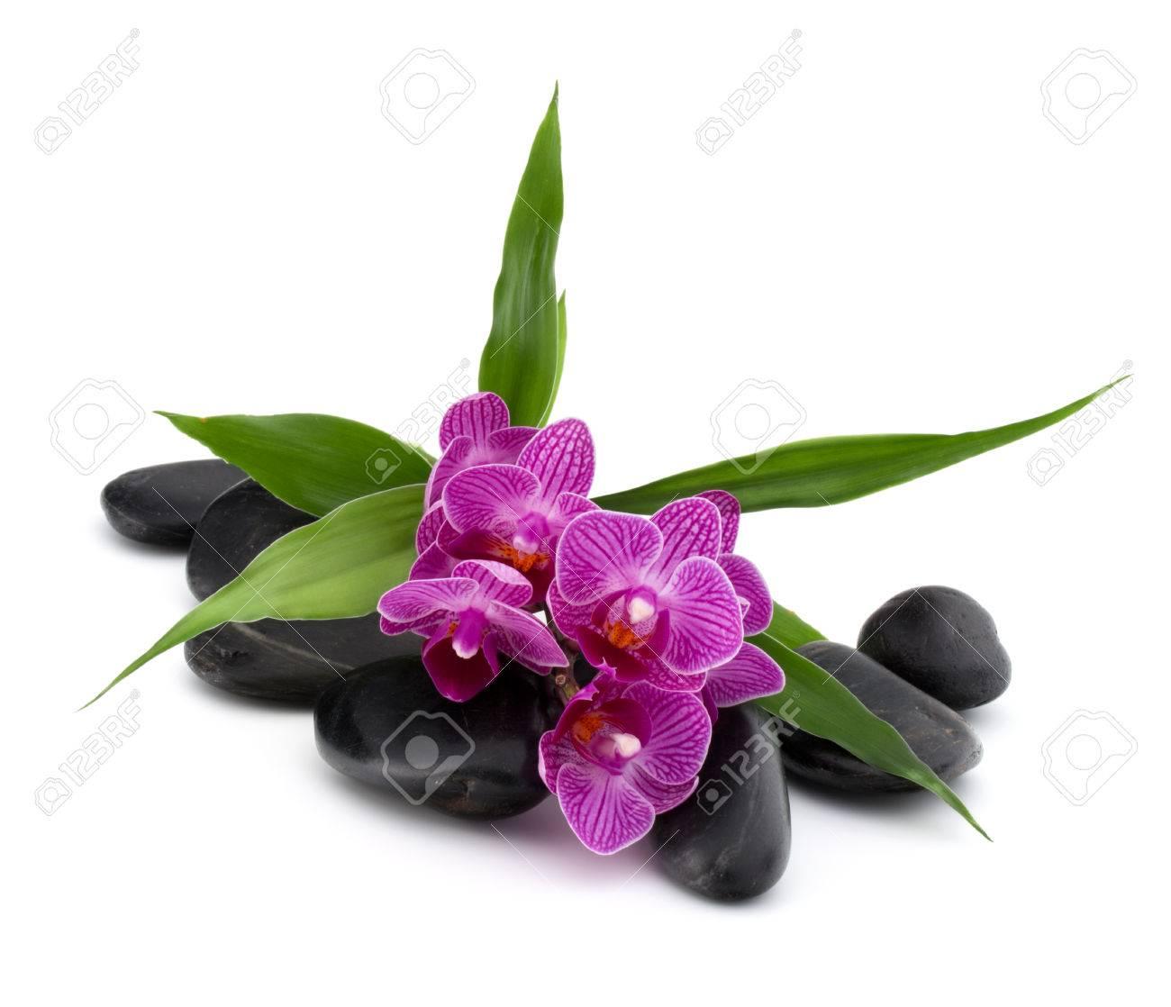 Cailloux zen et fleur d'orchidée  Pierre spa et le concept de soins de  santé