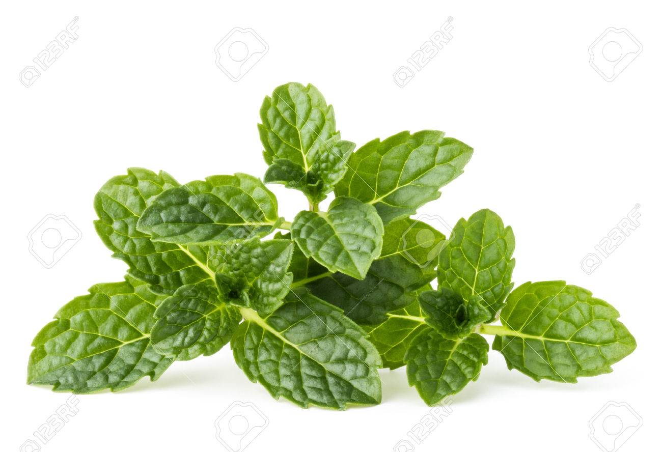 Fresh mint herb leaves isolated on white background cutout - 53854374
