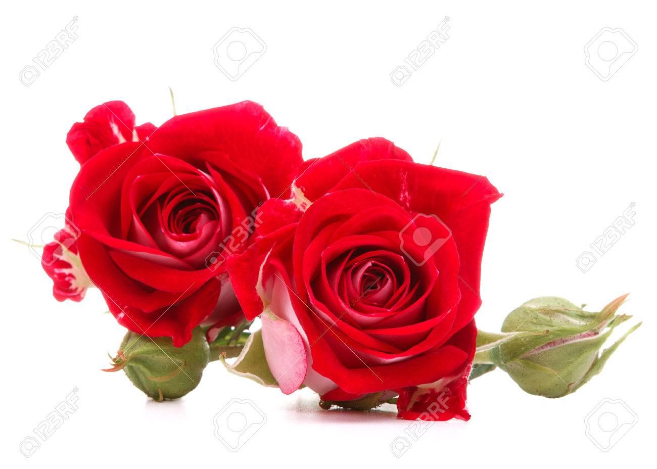 Bouquet De Fleur Rose Rouge Isole Sur Decoupe De Fond Blanc Banque D