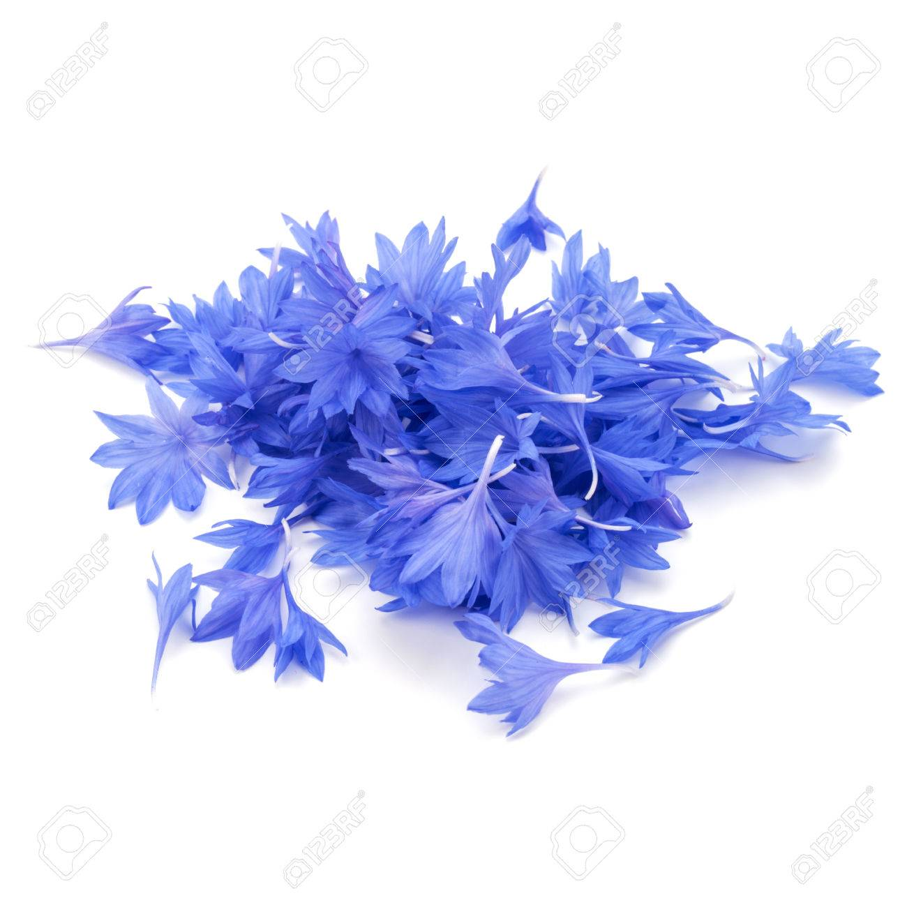 Blue cornflower herb or bachelor button flower petals isolated blue cornflower herb or bachelor button flower petals isolated on white background cutout stock photo izmirmasajfo