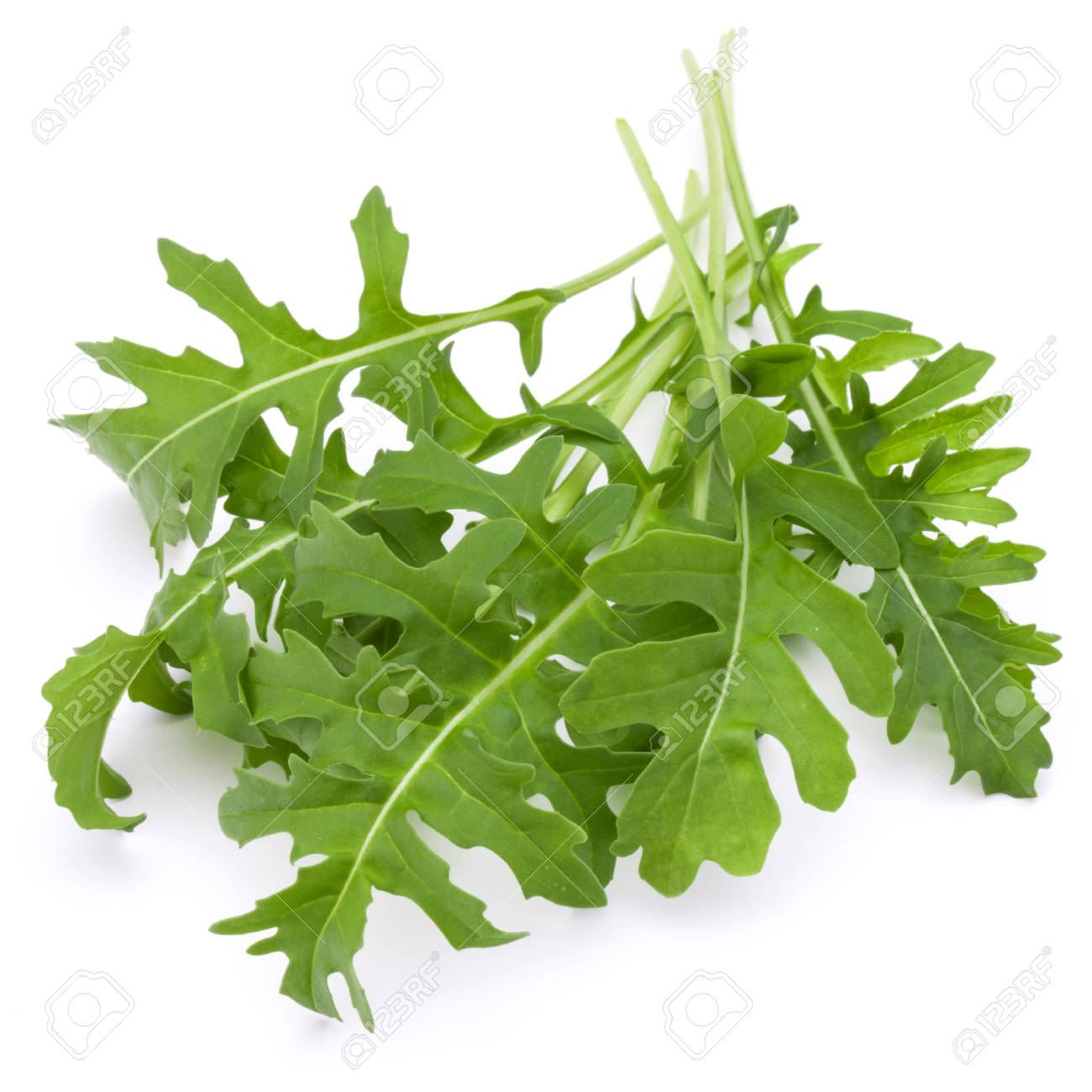 Close up studio shot of green fresh rucola leaves isolated on white background. Rocket salad or arugula. - 71273920