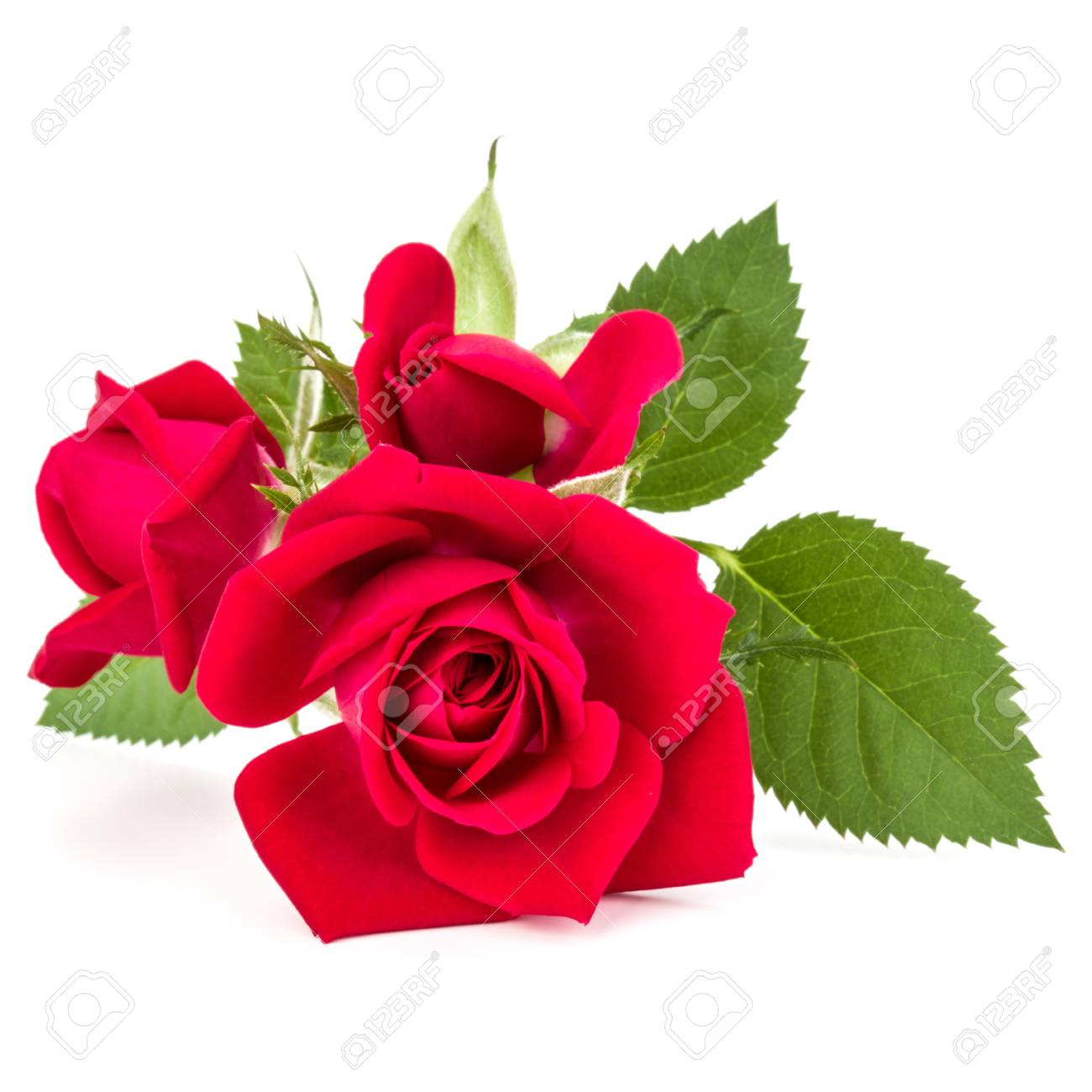 Red Rose Flower Bouquet Isolated On White Background Stock Photo