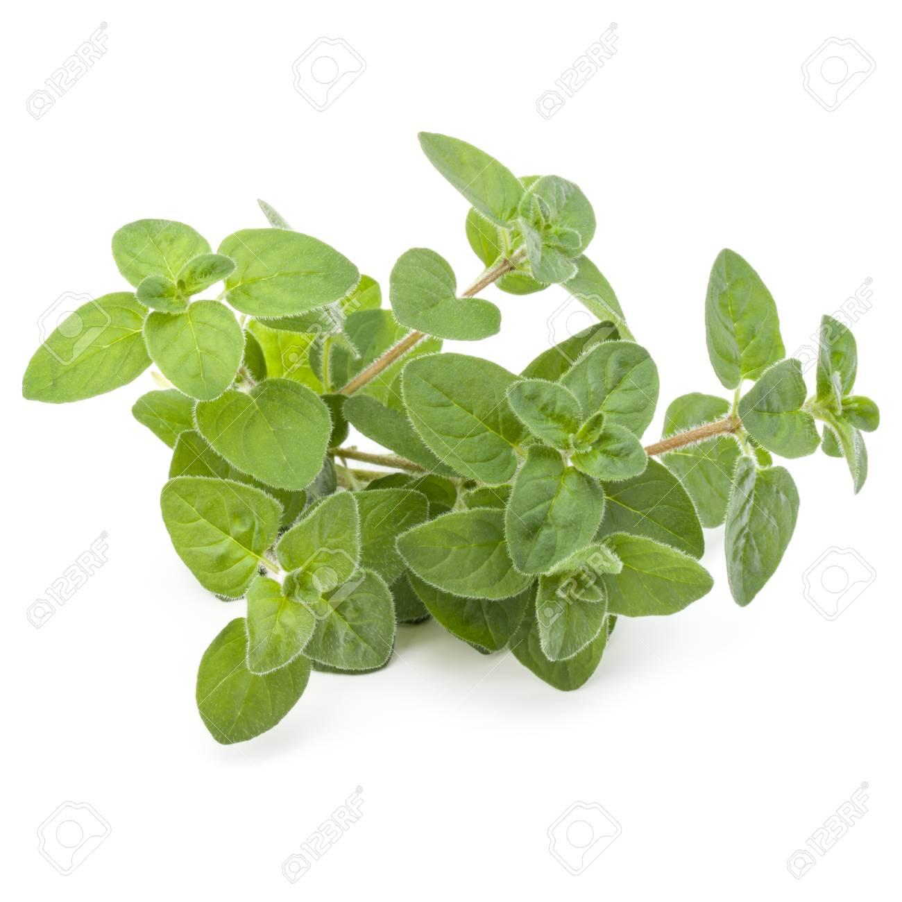 Oregano or marjoram leaves isolated on white background cutout - 88716776