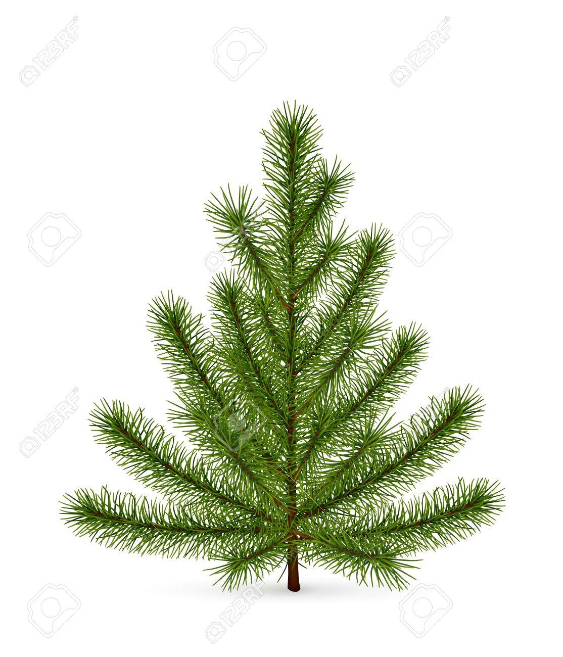 Spruce, high-quality Stock Vector - 13820540