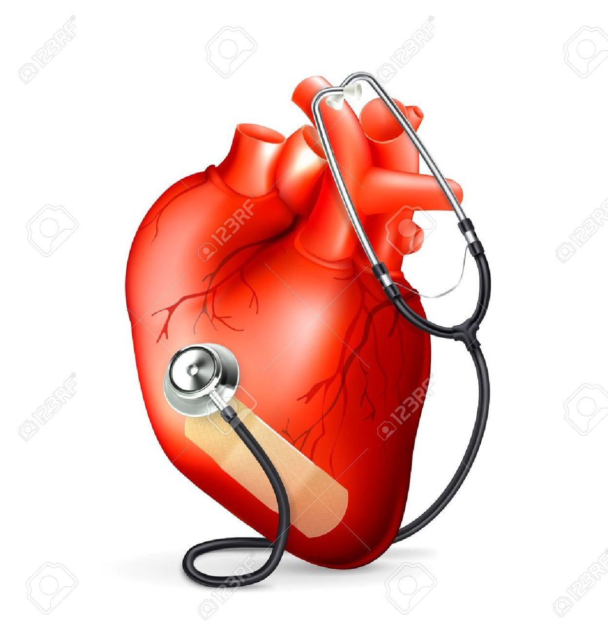 Heart and stethoscope - 13833766