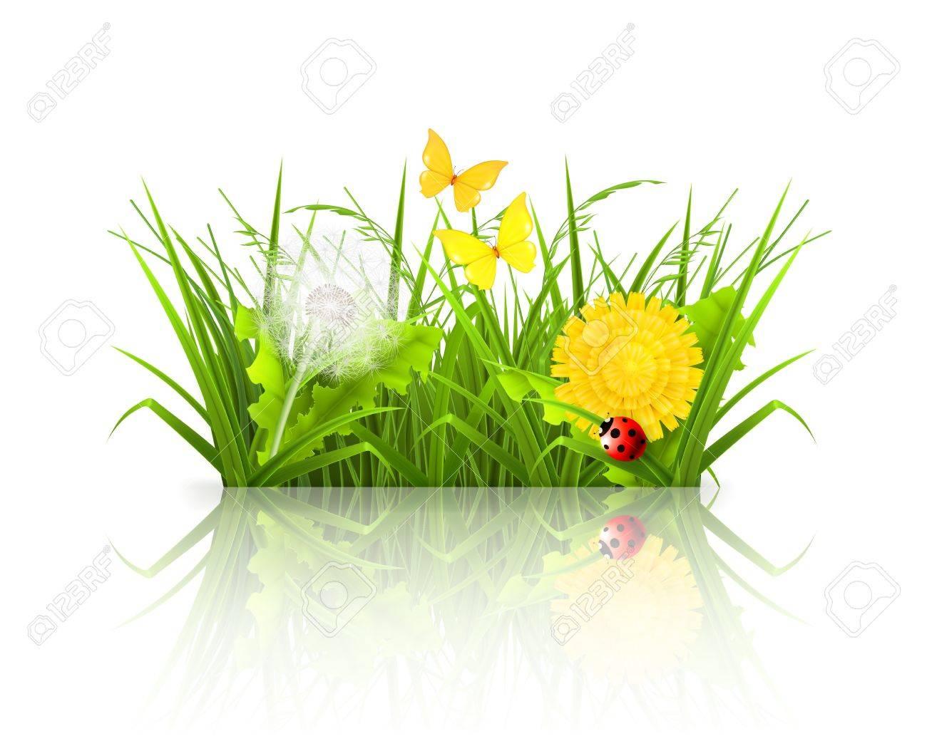 Summer grass Stock Vector - 13898908