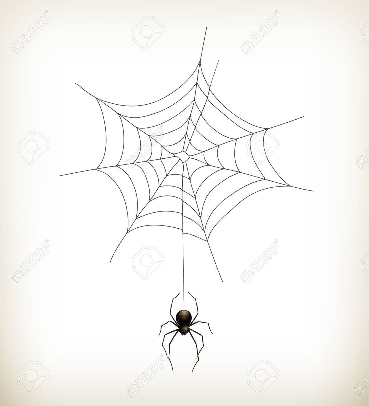 Spider and web Stock Vector - 15538792