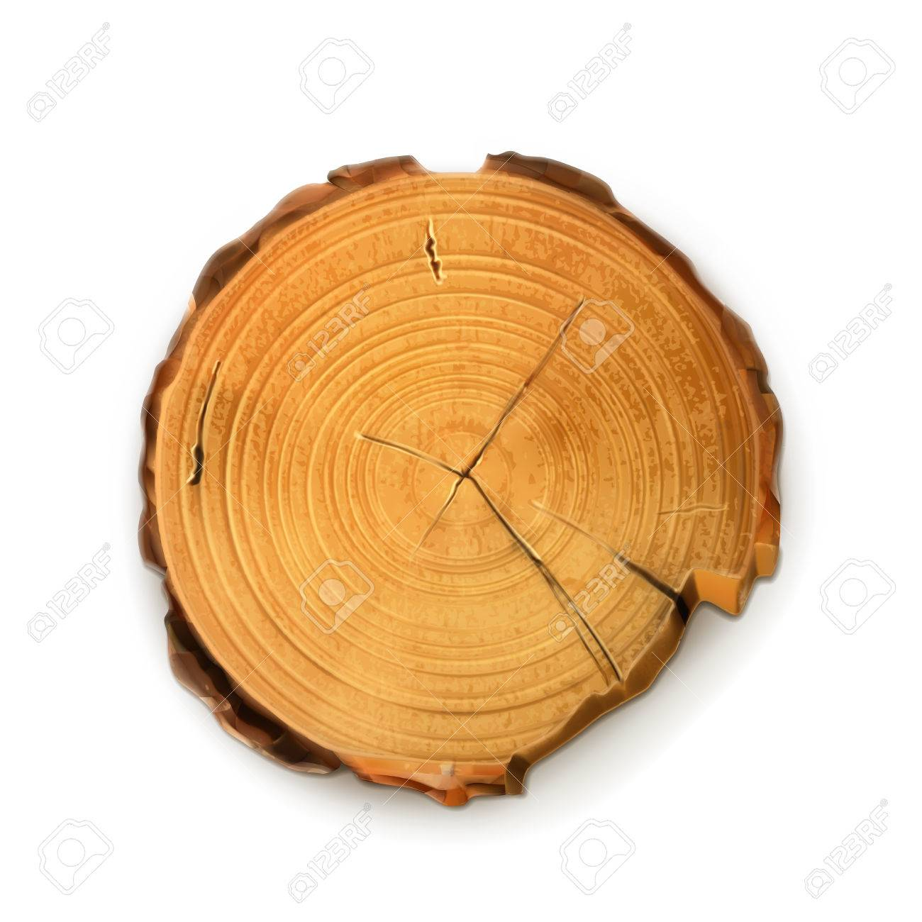 Tree stump, round cut with annual rings vector - 32259325