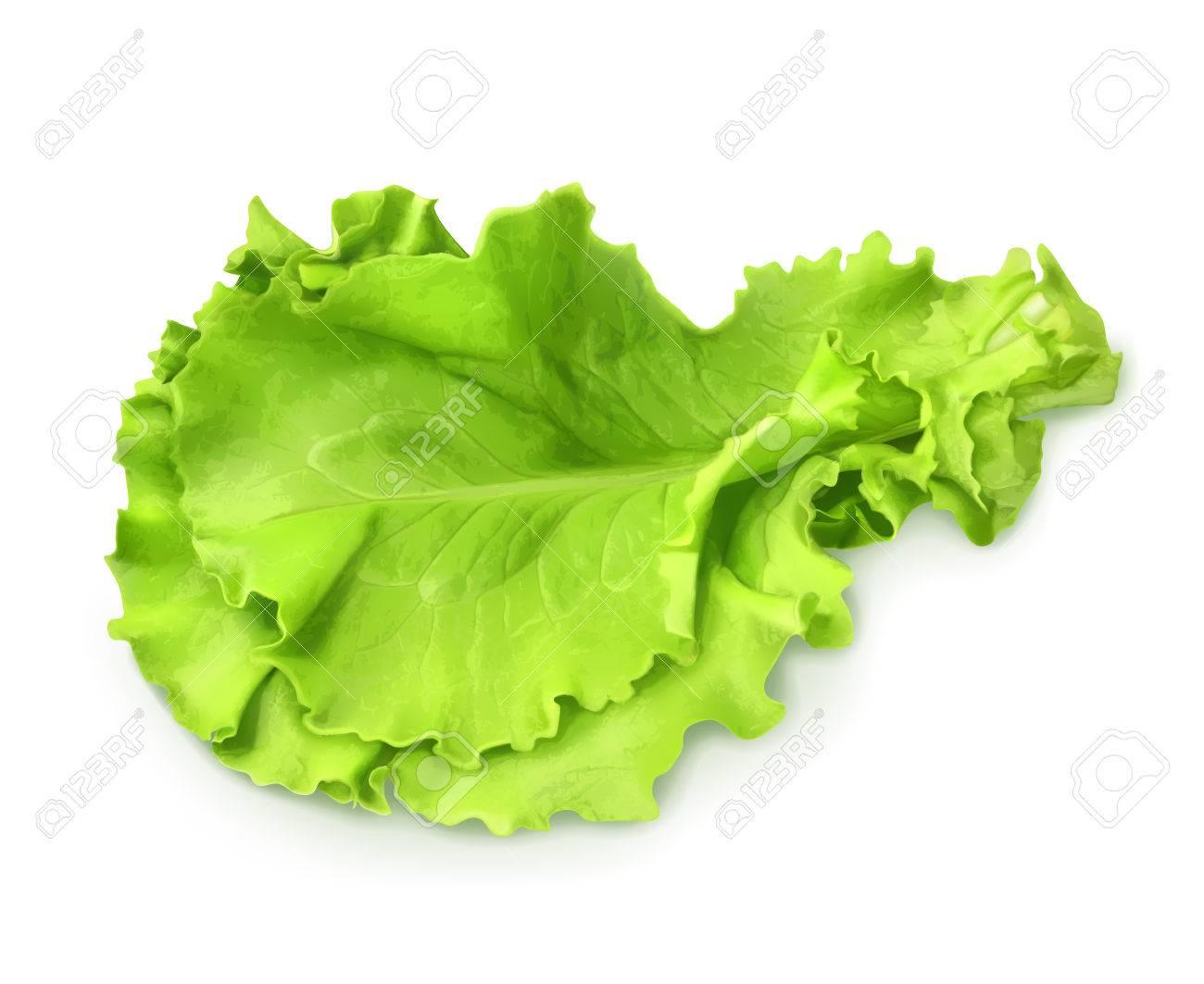 新緑の葉のレタスイラストのイラスト素材ベクタ Image 32465948