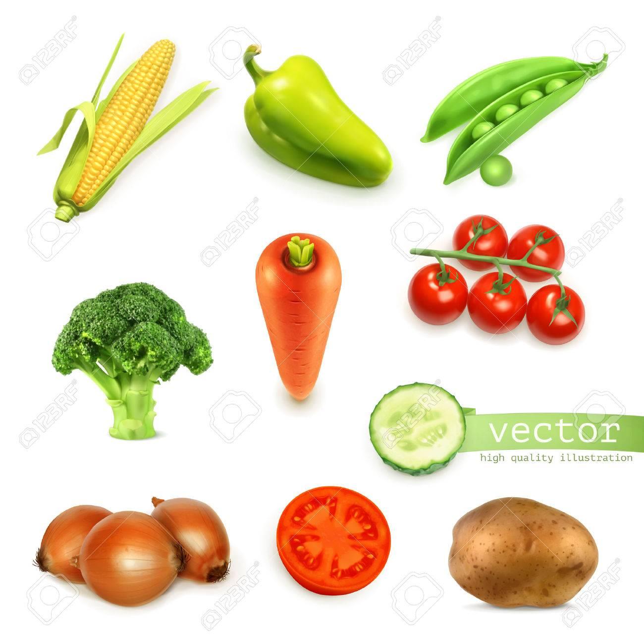 Set of vegetables, vector illustration - 32543707