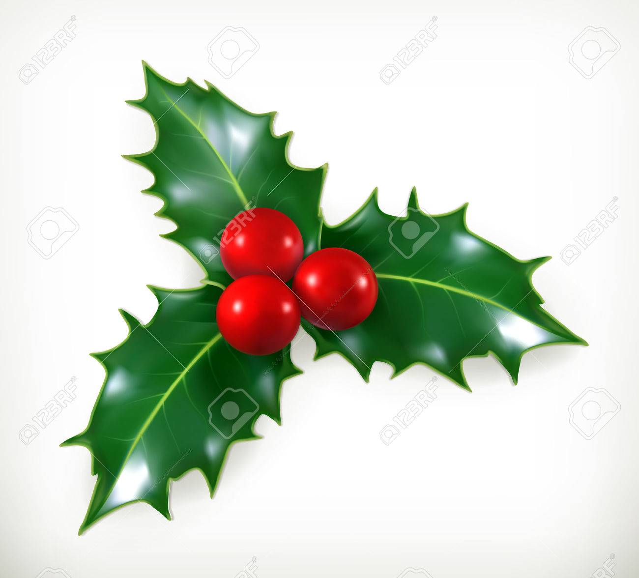 Holly, traditional Christmas decoration vector icon Stock Vector - 33286741
