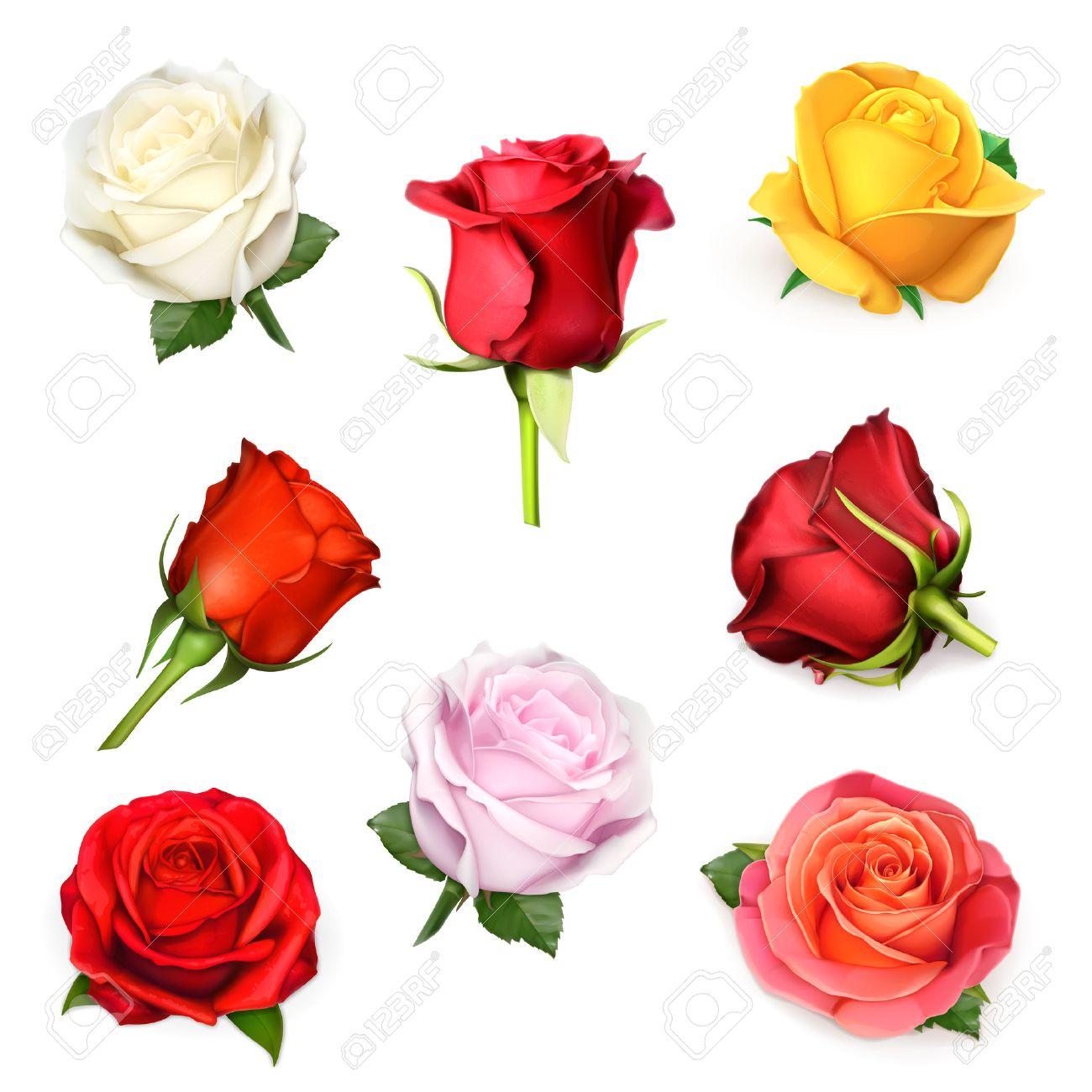 Roses vector set Stock Vector - 36963955
