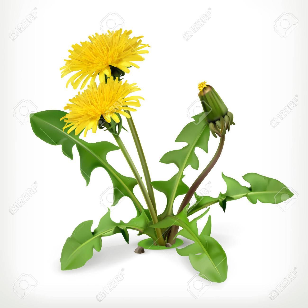 Dandelion flowers, vector icon Stock Vector - 39222848