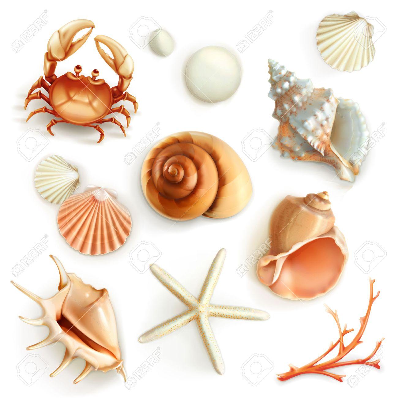 Seashells, set vector icons Stock Vector - 41623493