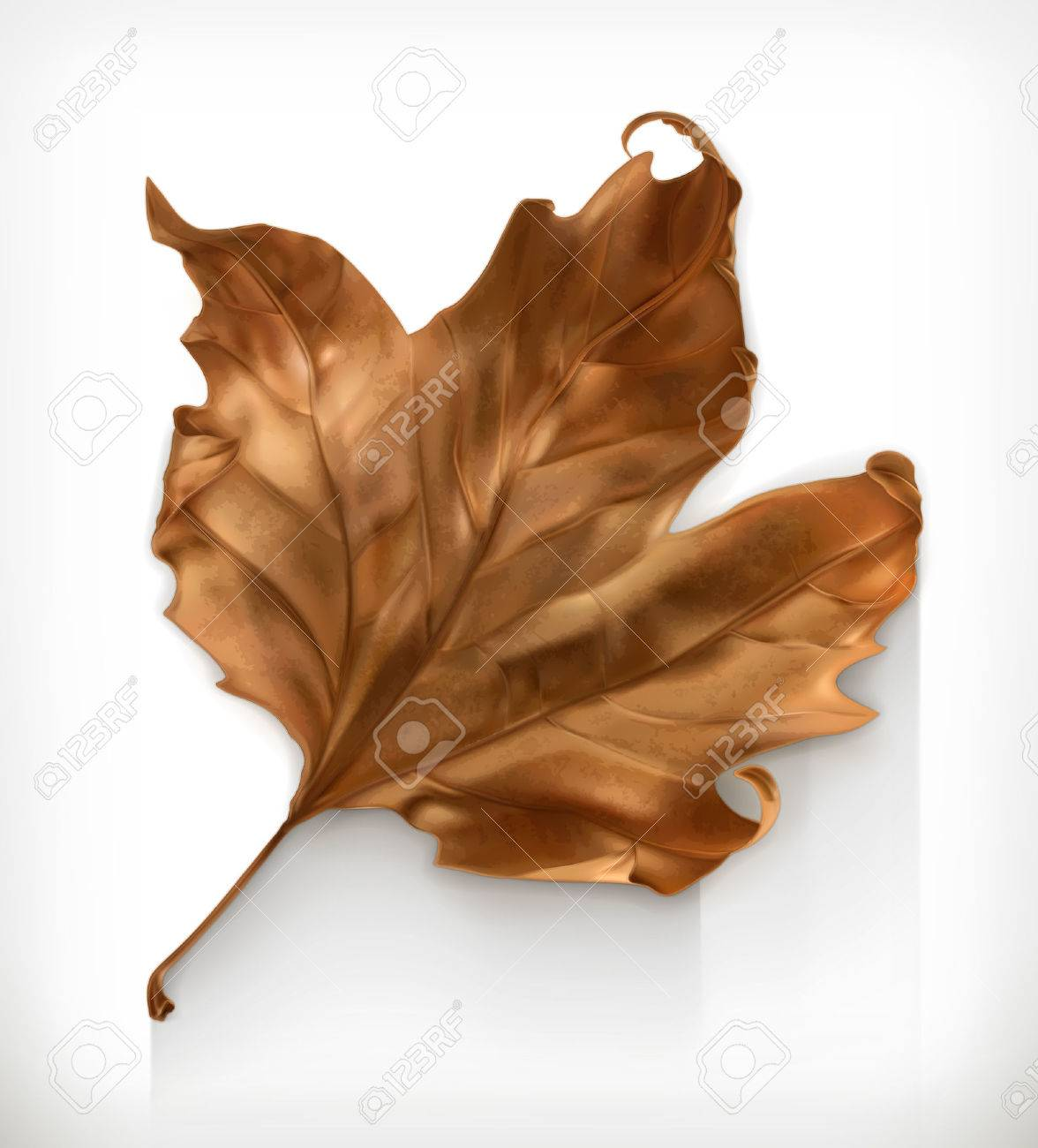 Dry maple leaf, autumn vector icon Stock Vector - 46719446