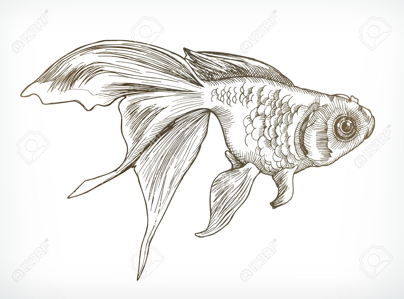 gold fish sketches hand drawing vector stock vector 57589947